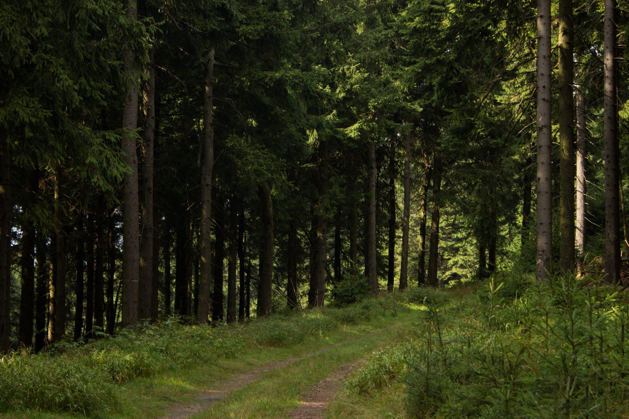 Großer Beerberg Schneekopf und Teufelskanzel, Gipfeltour Wanderung im Thüringer Wald, Wanderweg durch Wald