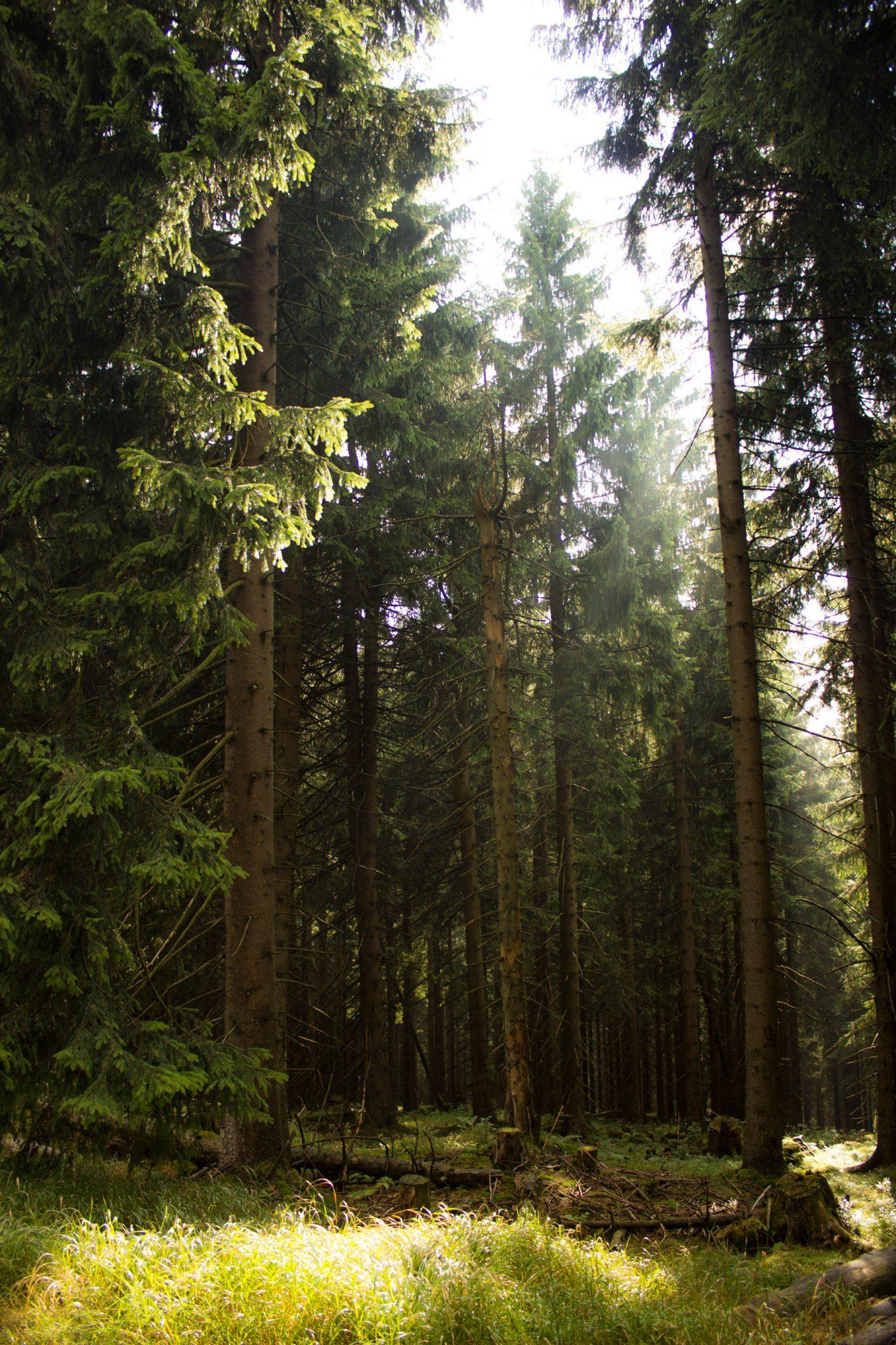 Großer Beerberg Schneekopf und Teufelskanzel, Gipfeltour Wanderung im Thüringer Wald, schöne Lichtstimmung im Wald, Sonne scheint nach Regen