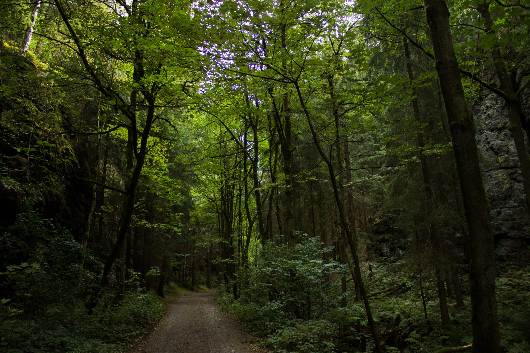 Marderschlucht wandern bei Tambach-Dietharz, schöner Wanderweg durch dichten, grünen Wald entlang Marderbach und Tal