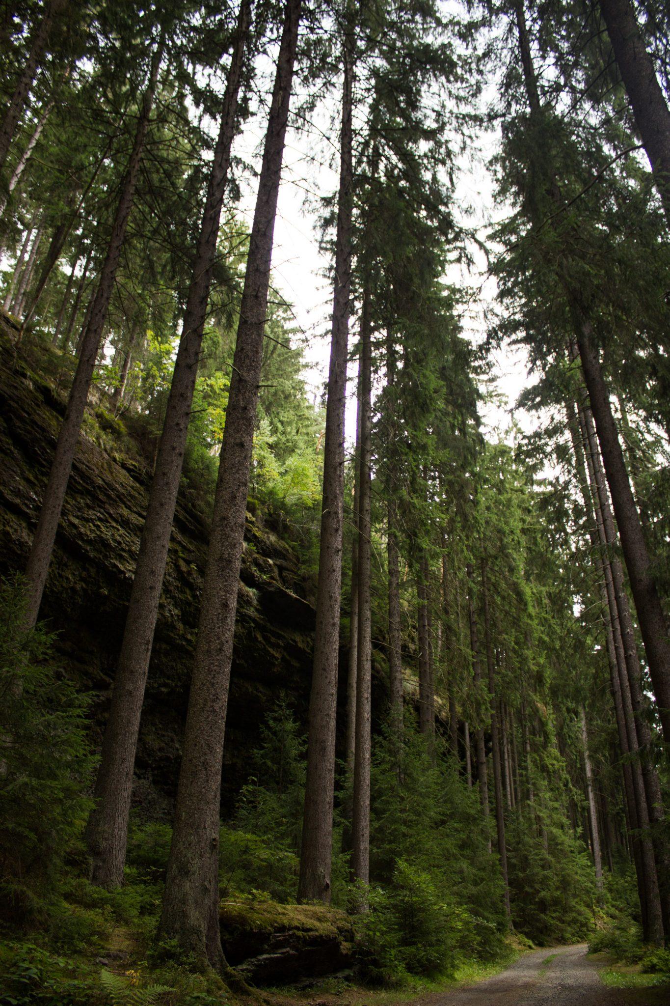 Marderschlucht wandern bei Tambach-Dietharz, schöner Wanderweg durch dichten, grünen Wald entlang Marderbach und Tal, große Felswände, hohe Bäume