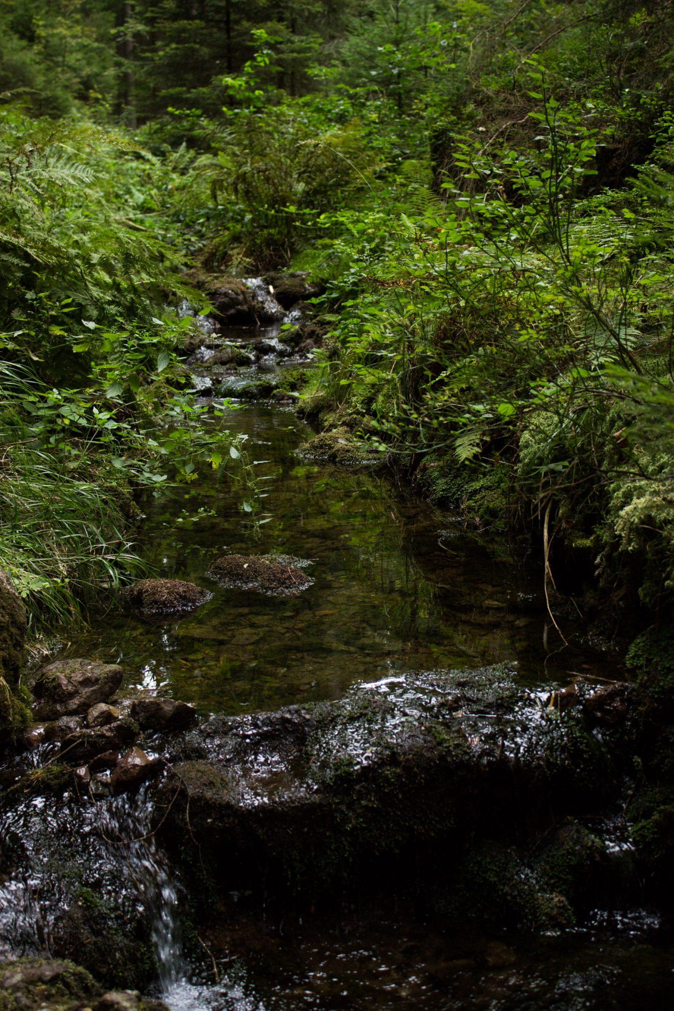 Marderschlucht wandern bei Tambach-Dietharz, schöner Wanderweg durch dichten, grünen Wald entlang plätscherndem Marderbach und Tal