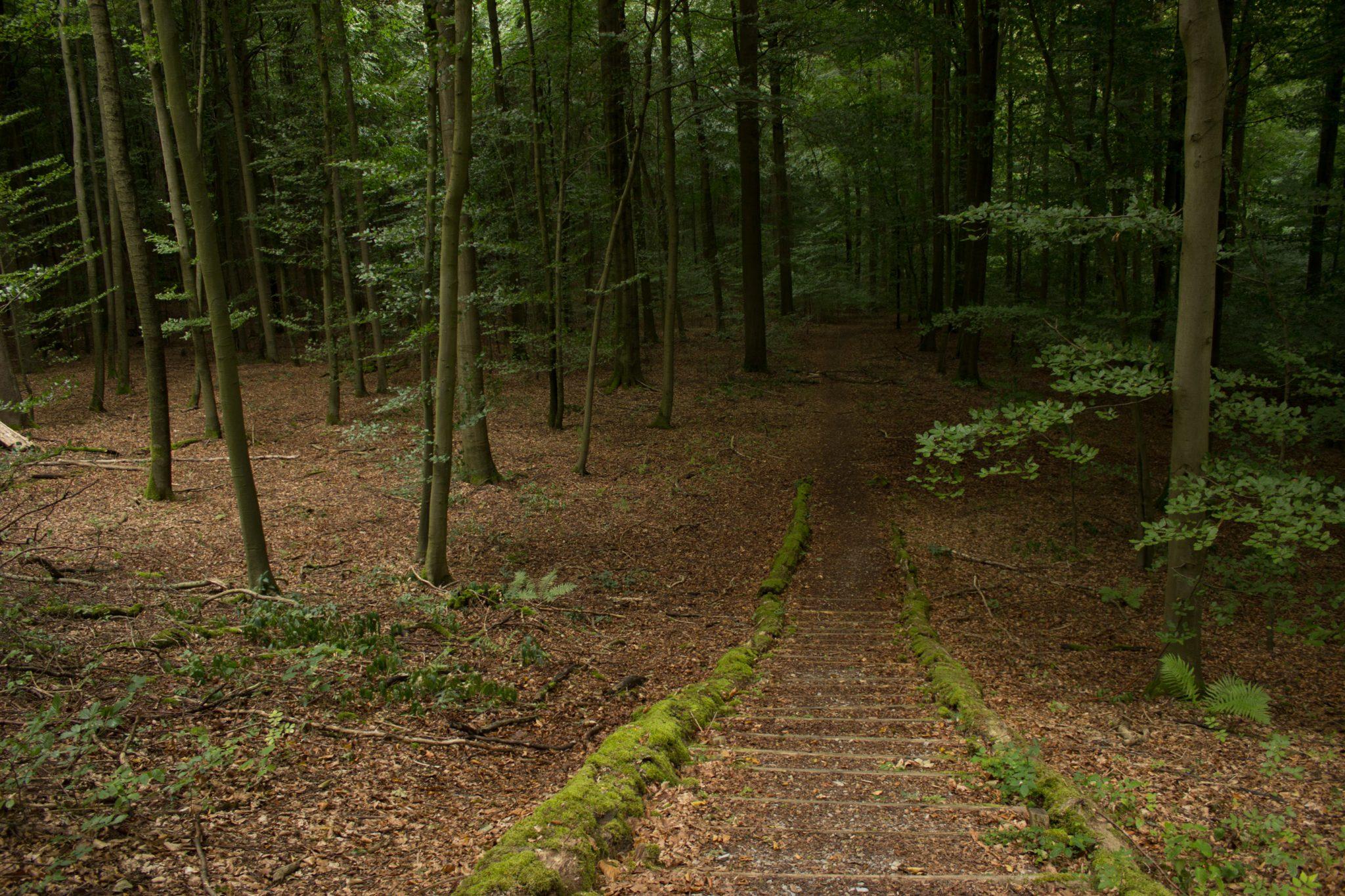 Nationalpark Hainich Saugrabenweg und Betteleichenweg wandern, dichter, ursprünglicher Buchenwald, tolle Atmosphäre, Treppe im Hainich, ansonsten fast keine Änderung von Höhenmetern