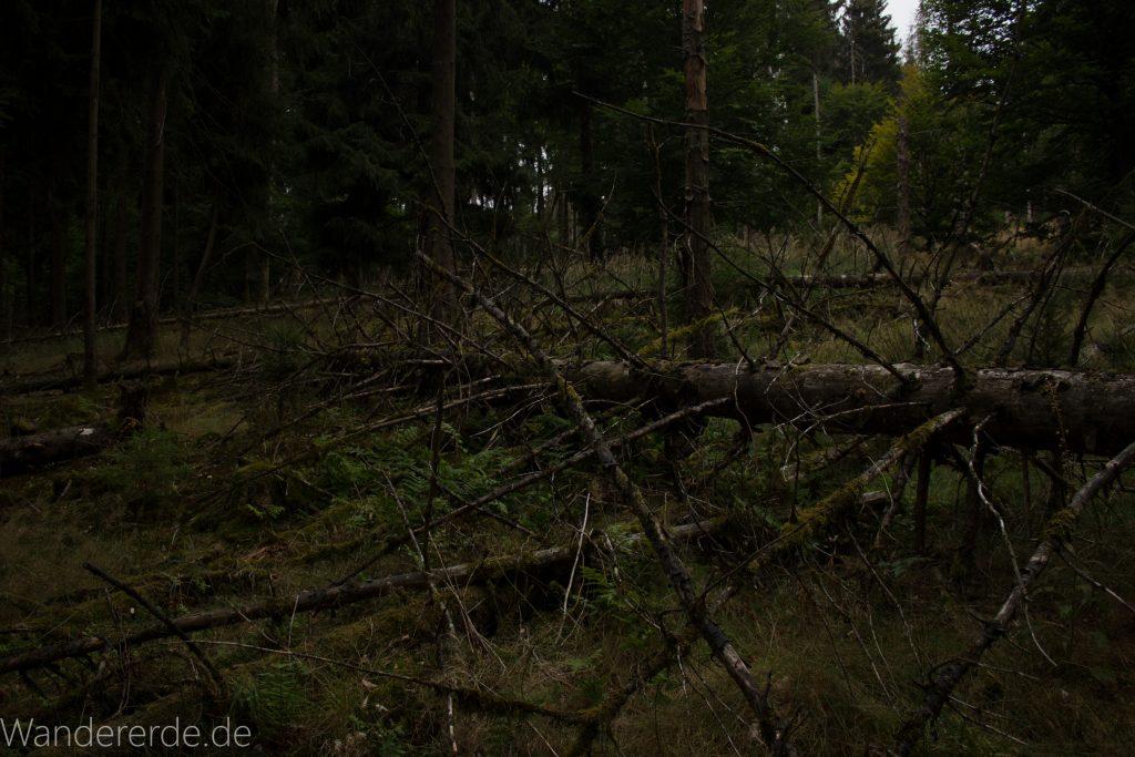 Von Frebershausen zum Quernst, zum Elisabetherplatz und zur Wolfsgrube, Wanderweg im schönen Wald im Nationalpark Kellerwald Edersee über naturbelassene Pfade, schöner Wald, umgekippter Baum