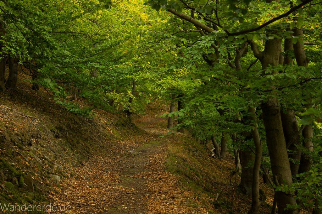 Wanderung um die Mühlecke, lohnenswerte kurze Wanderung über schmalen Pfad, tolle Aussicht, Krüppelbaum, schöne Lichtstimmung, saftig grüner Wald, Rundweg um Mühlecke, kleiner Berg