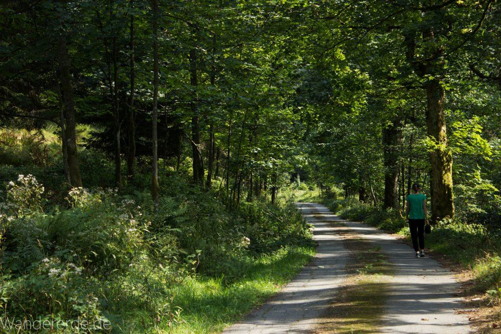Dreibrodesteine Wanderung im Harz bei Sankt Andreasberg, Weg durch das schöne Siebertal