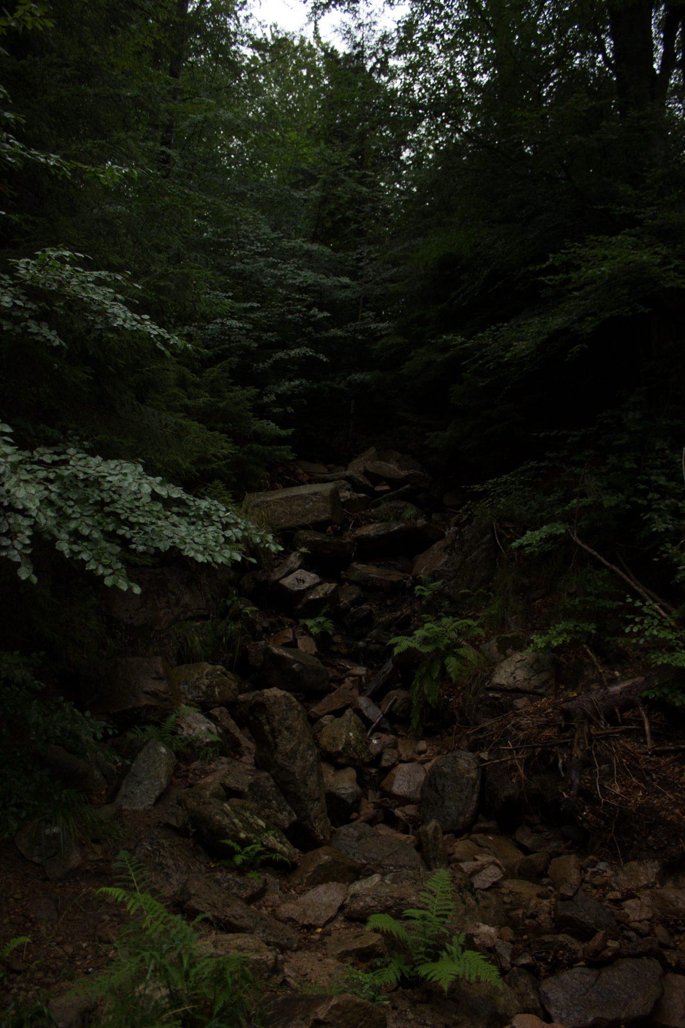 Wanderung Brocken über Heinrich-Heine-Weg Start in Ilsenburg, Nationalpark Harz, schöner Wanderweg im Wald entlang des Fluß Ilse, atmosphärisch, herrliche frische Luft