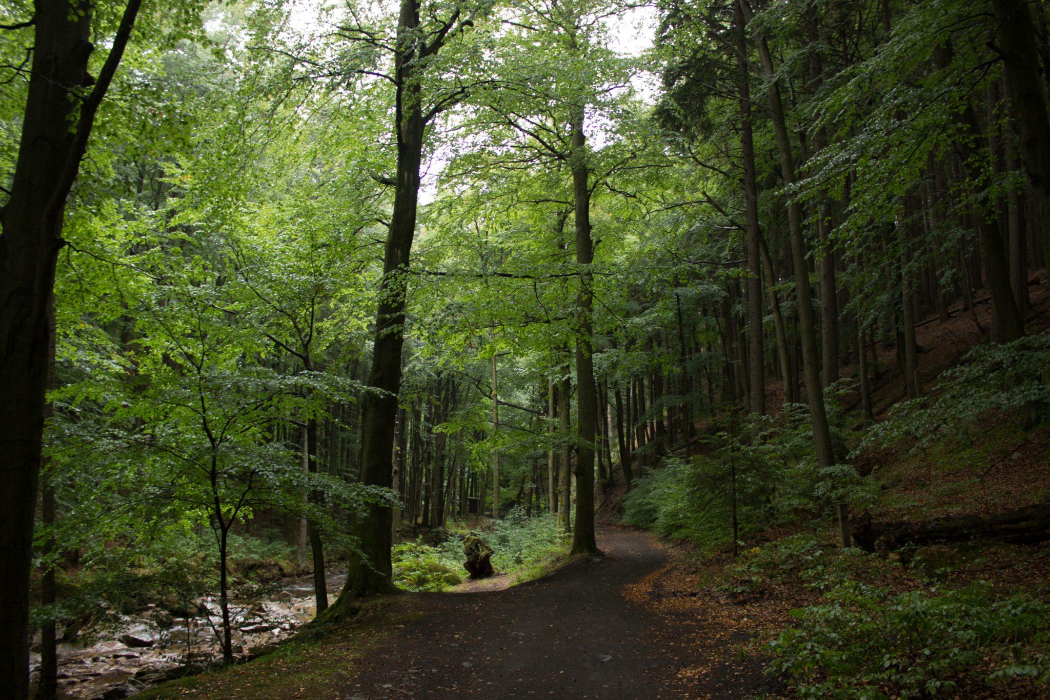 Wanderung Brocken über Heinrich-Heine-Weg Start in Ilsenburg, Nationalpark Harz, schöner Wanderweg im Wald entlang des Fluß Ilse, atmosphärisch, herrliche frische Luft, viele Laubbäume