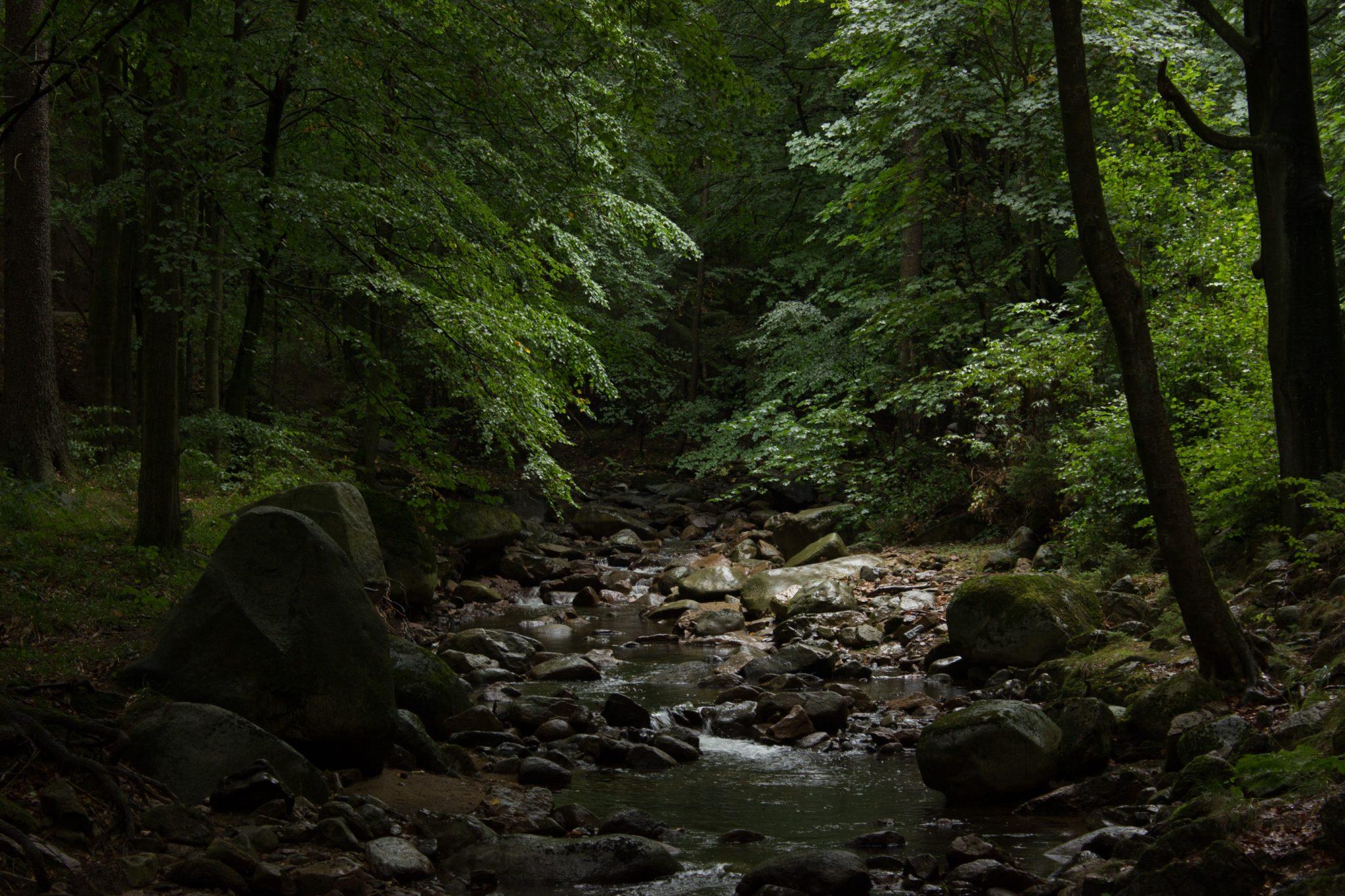 Wanderung Brocken über Heinrich-Heine-Weg, Start in Ilsenburg, Nationalpark Harz, schöner Wanderweg im Wald entlang des Fluß Ilse, atmosphärisch, herrliche frische Luft, viele Laubbäume