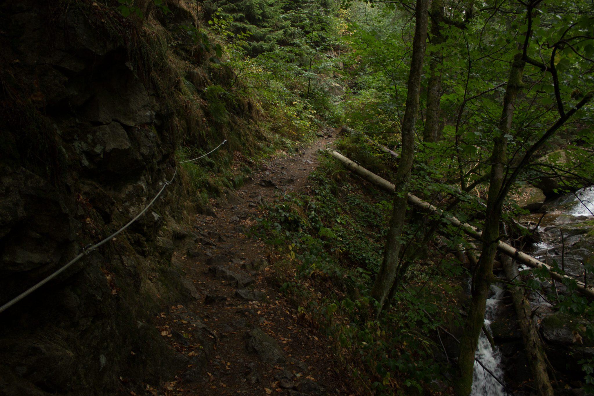 Wanderung Brocken über Heinrich-Heine-Weg, Start in Ilsenburg, Nationalpark Harz, schöner Wanderweg im Wald entlang des Fluß Ilse, atmosphärisch, herrliche frische Luft, viele Laubbäume, über Stock und Stein über schmalen Pfad