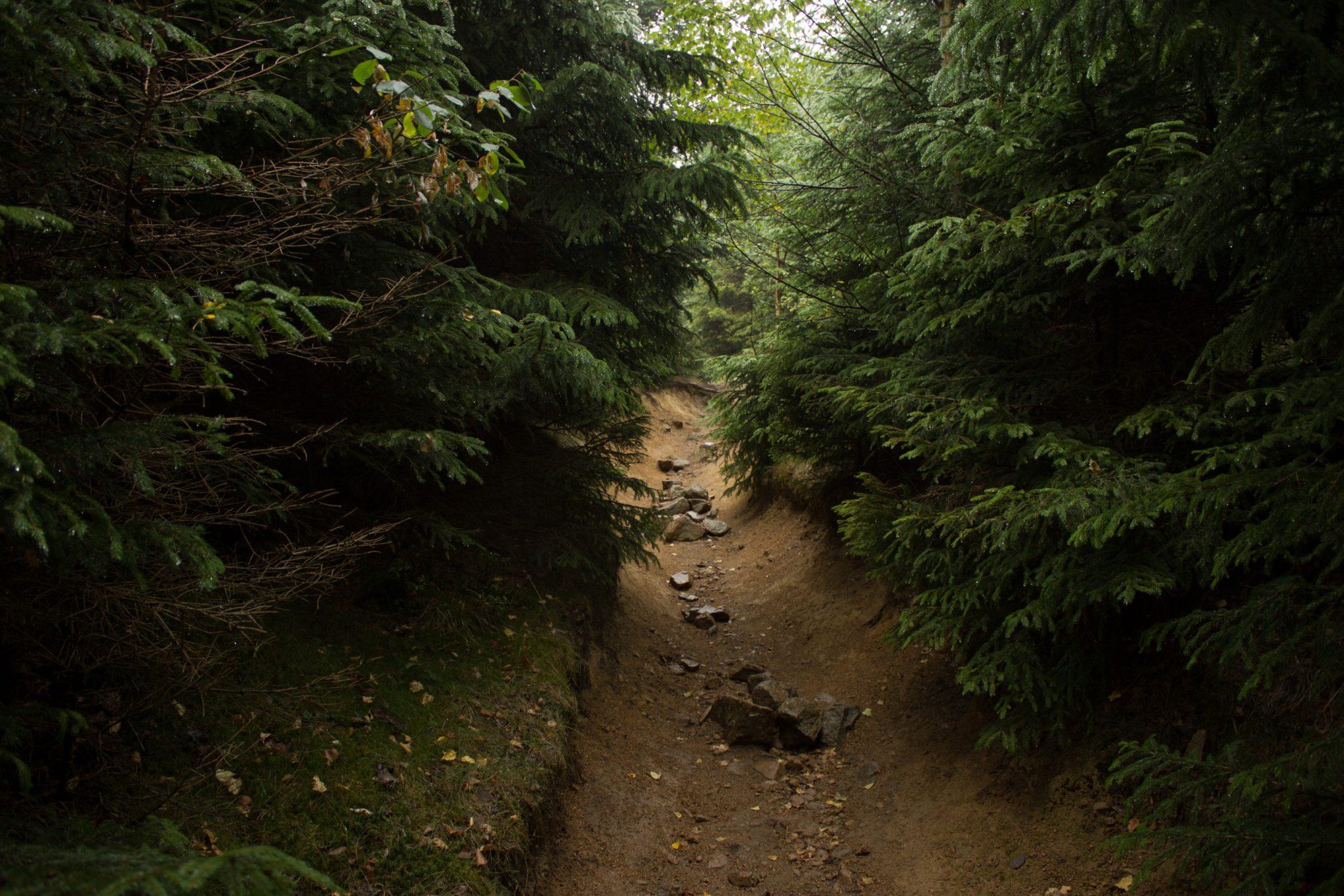 Wanderung Brocken über Heinrich-Heine-Weg, Start in Ilsenburg, Nationalpark Harz, schöner Wanderweg im Wald, atmosphärisch, herrliche frische Luft, über Stock und Stein über schmalen Pfad