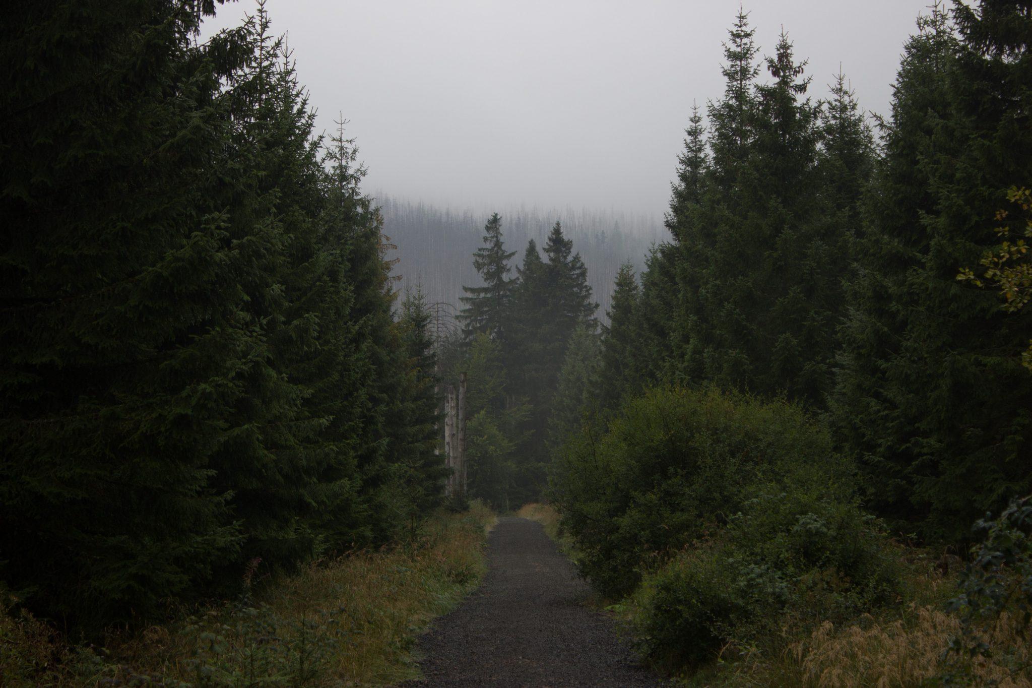 Wanderung Brocken über Heinrich-Heine-Weg Start in Ilsenburg, Nationalpark Harz, triste Stimmung, steiniger Weg zum Brocken. ringsum Wald