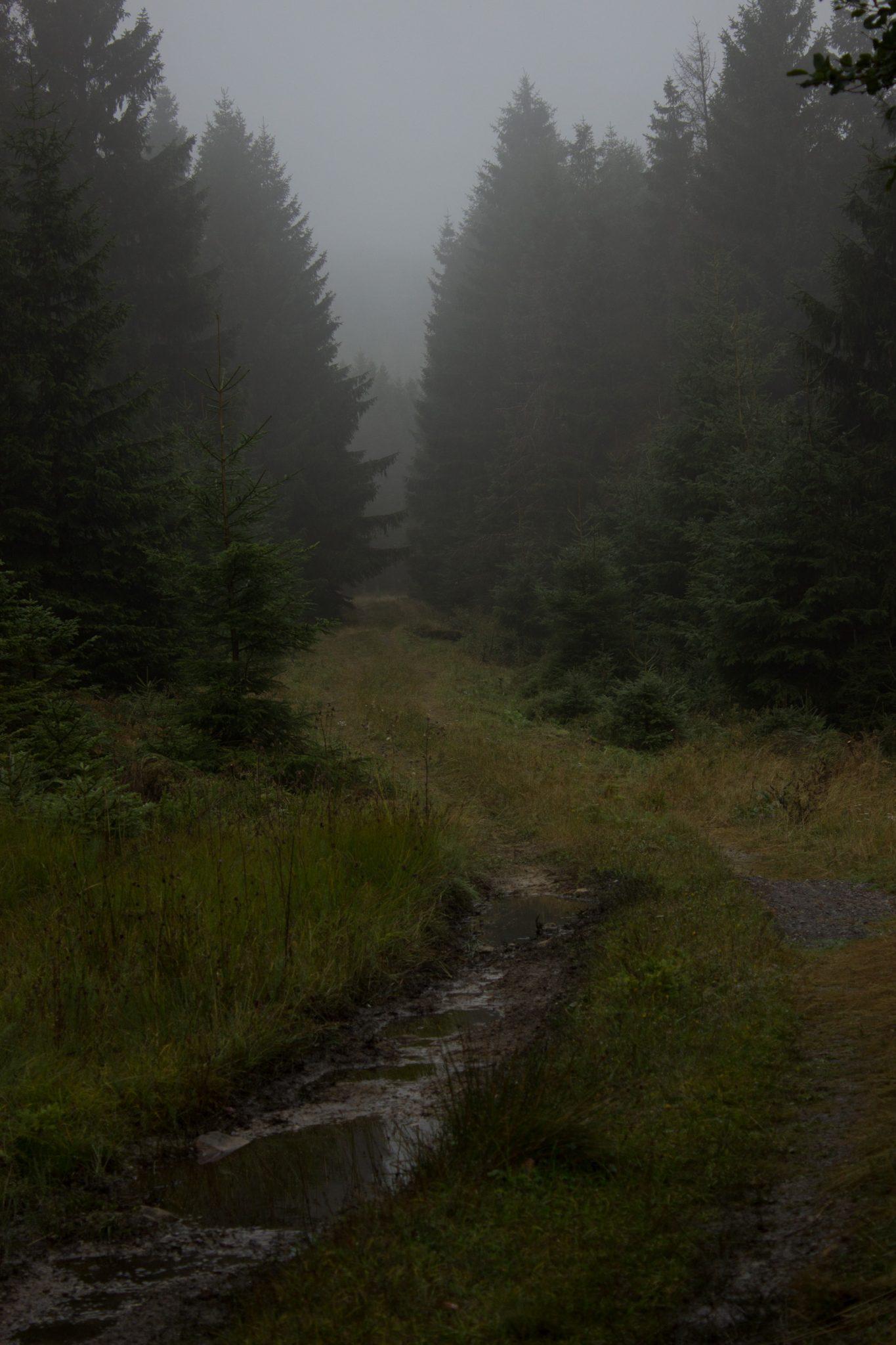 Wanderung Brocken über Heinrich-Heine-Weg Start in Ilsenburg, Nationalpark Harz, triste Stimmung, steiniger Weg zum Brocken. ringsum Wald mit hohen Tannen, regnerisch, schöne einsame Atmosphäre