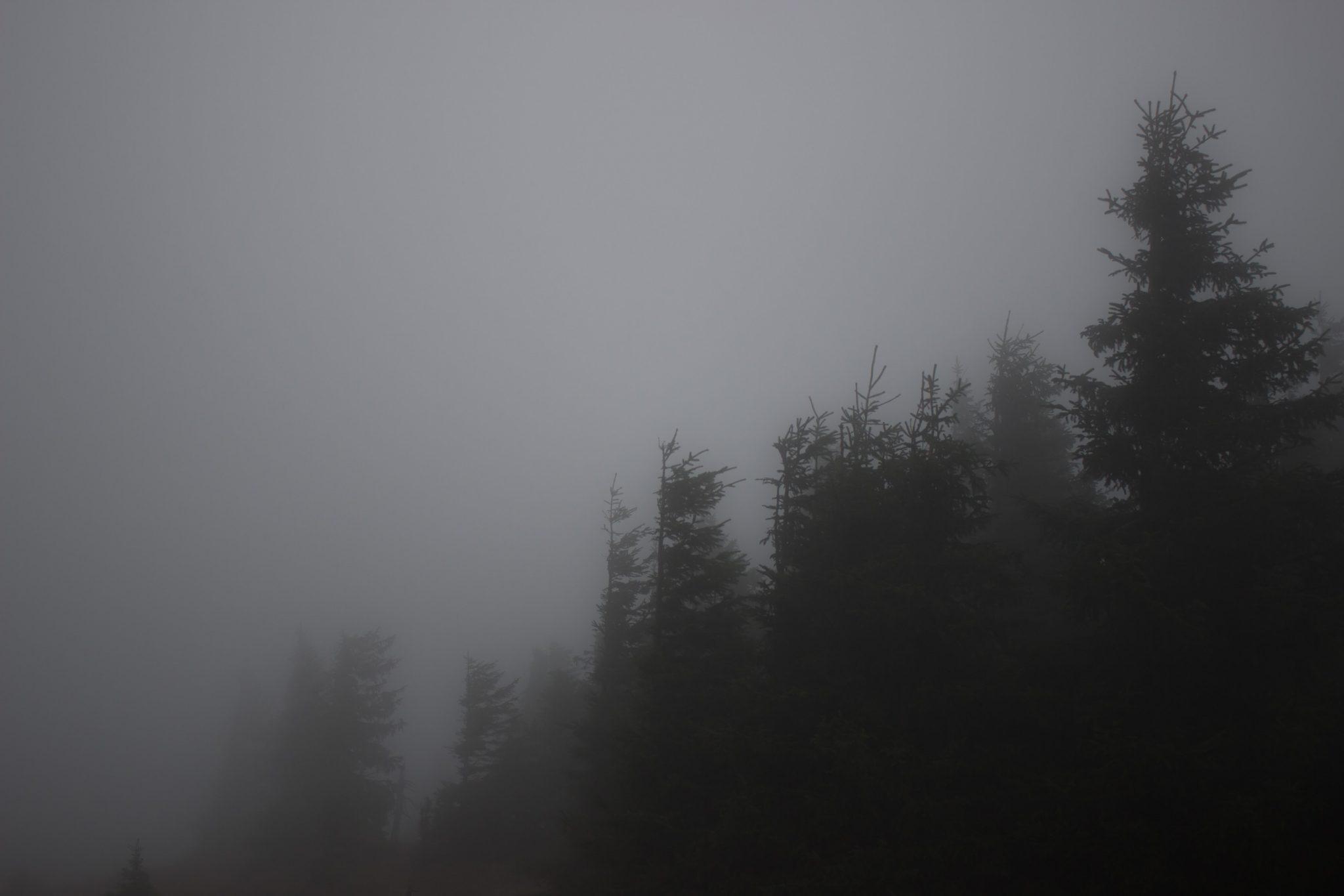 Wanderung Brocken über Heinrich-Heine-Weg Start in Ilsenburg, Nationalpark Harz, triste Stimmung, Weg zum Brocken über alte Militärstraße, ringsum Wald mit hohen Bäumen, regnerisch, sehr neblig, schöne einsame Atmosphäre