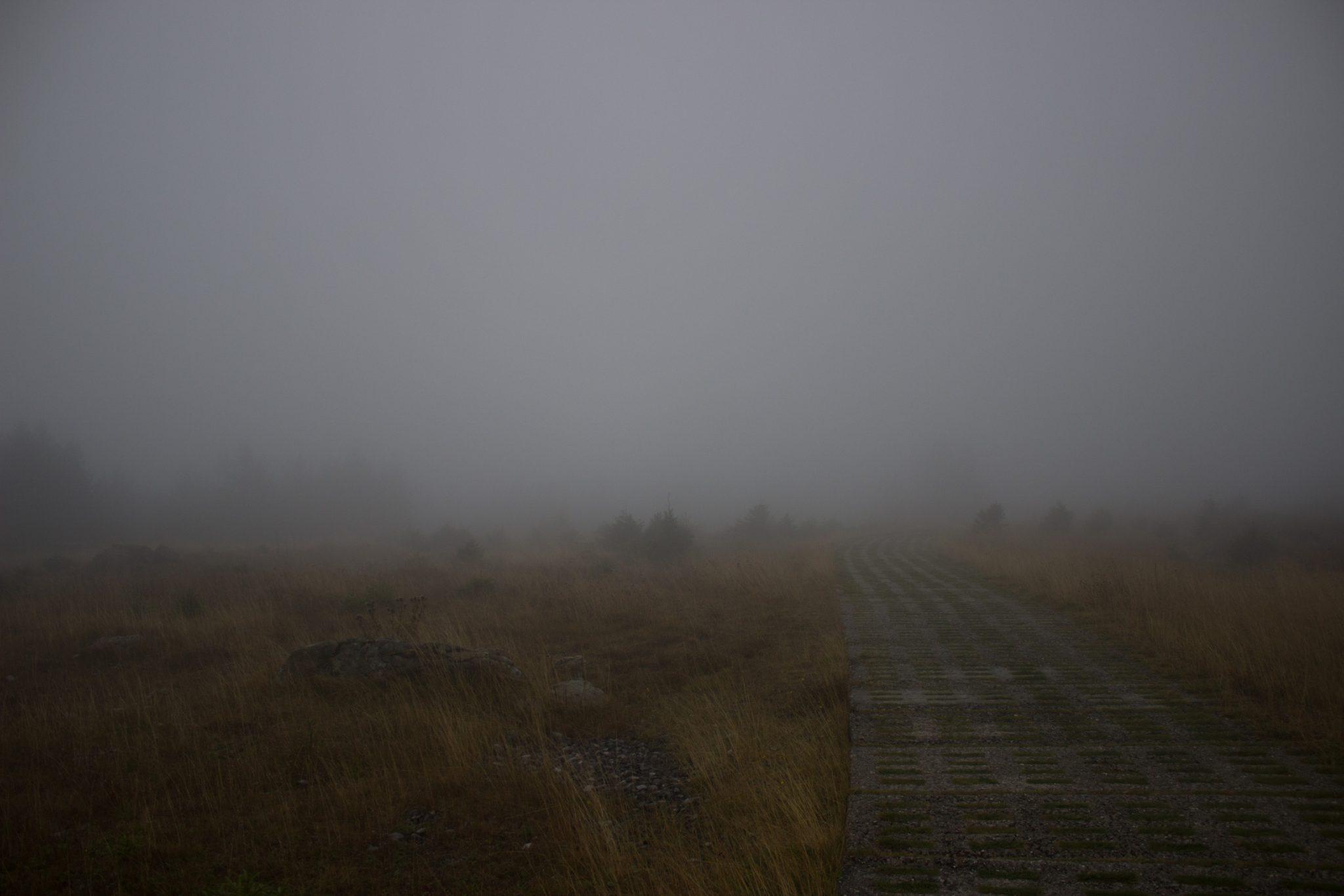 Wanderung Brocken über Heinrich-Heine-Weg Start in Ilsenburg, Nationalpark Harz, triste Stimmung, Weg zum Brocken über alte Militärstraße, regnerisch, sehr neblig, schöne einsame Atmosphäre