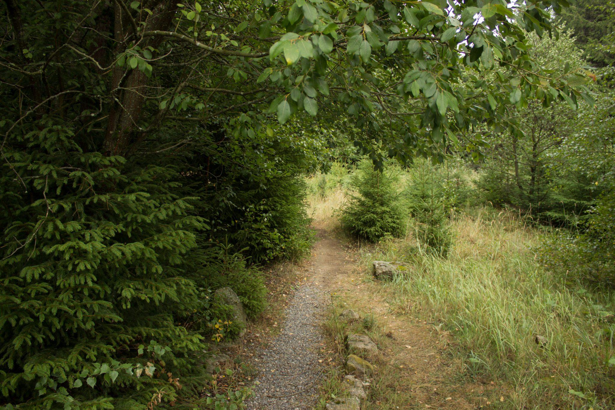 Wanderung Brocken über Heinrich-Heine-Weg Start in Ilsenburg, Nationalpark Harz, schmaler schöner Pfad zum Scharfenstein