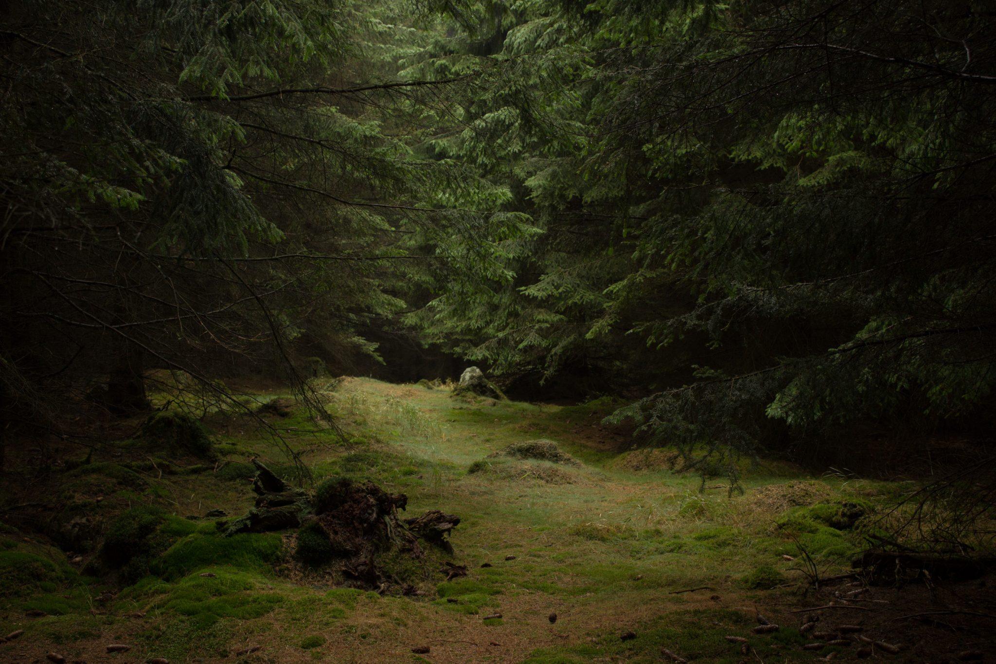 Wanderung Brocken über Heinrich-Heine-Weg Start in Ilsenburg, Nationalpark Harz, schmaler schöner Pfad zum Scharfenstein durch dichten Wald