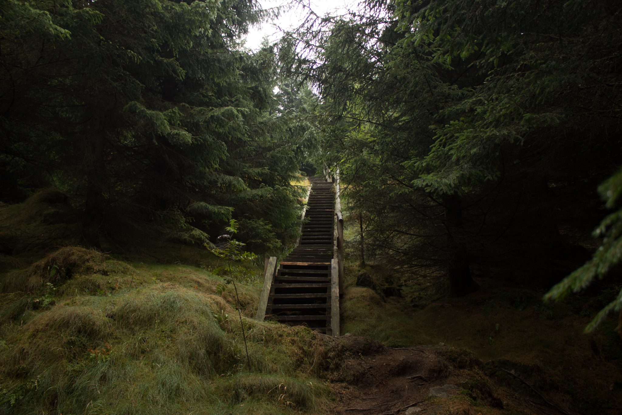 Wanderung Brocken über Heinrich-Heine-Weg Start in Ilsenburg, Nationalpark Harz, schmaler schöner Pfad zum Scharfenstein durch dichten Wald, Holztreppe, Aufstieg zum Scharfenstein