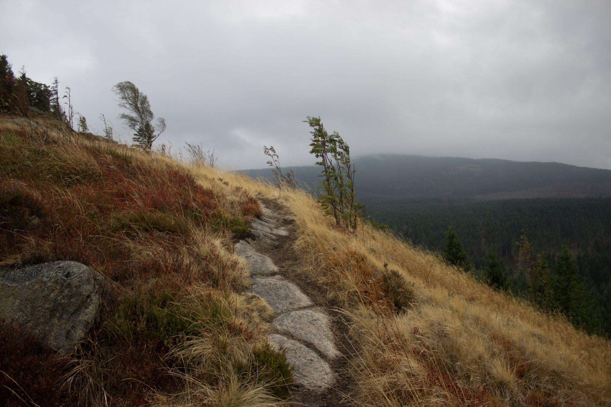 Wanderung Brocken über Heinrich-Heine-Weg Start in Ilsenburg, Nationalpark Harz, schmaler schöner Pfad zum Scharfenstein durch dichten Wald, oben grandiose Aussicht auf den Harz, frischer kühlender Wind