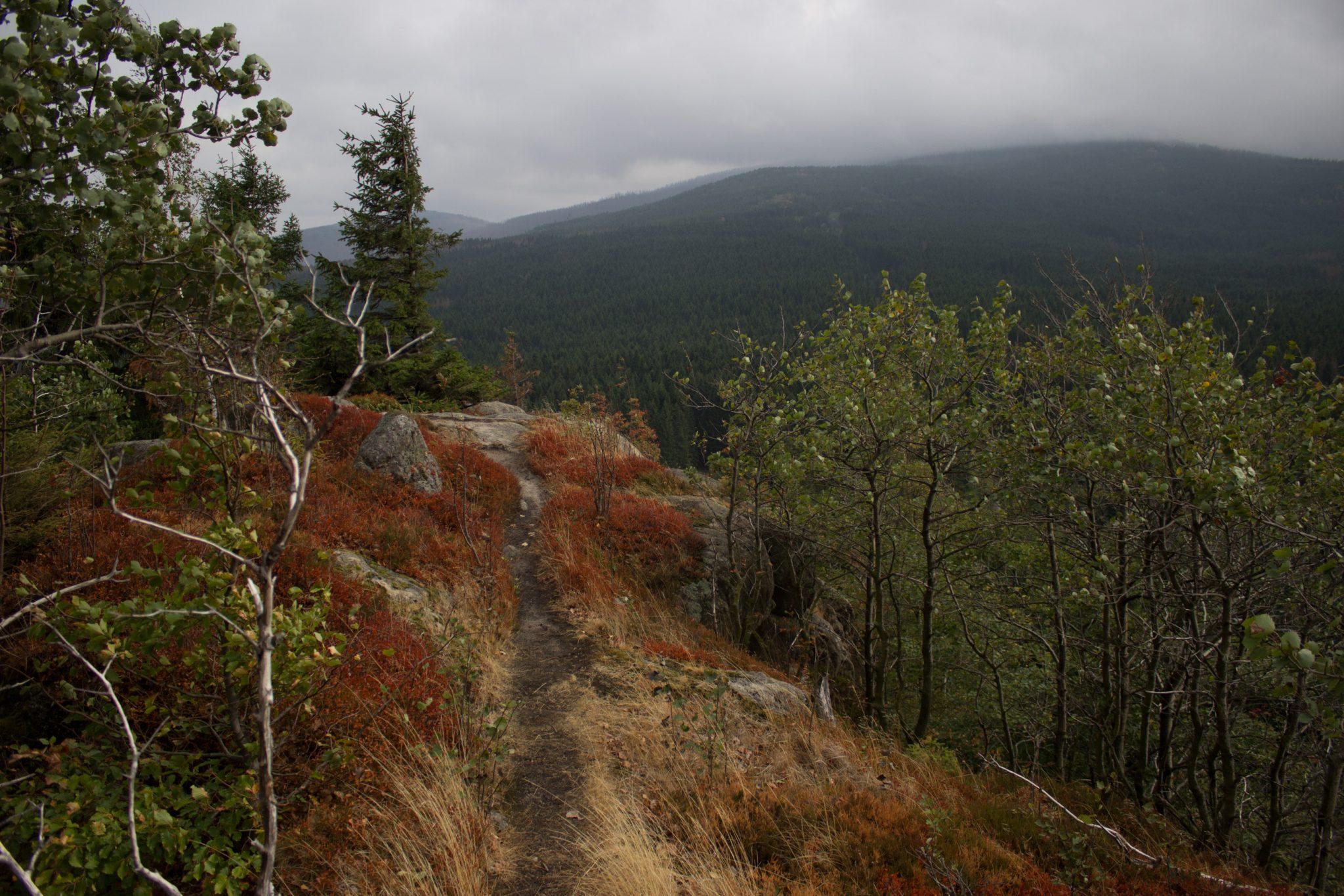 Wanderung Brocken über Heinrich-Heine-Weg Start in Ilsenburg, Nationalpark Harz, schmaler schöner Pfad zum Scharfenstein durch dichten Wald, oben grandiose Aussicht auf den Harz mit schönem Wald, frischer kühlender Wind