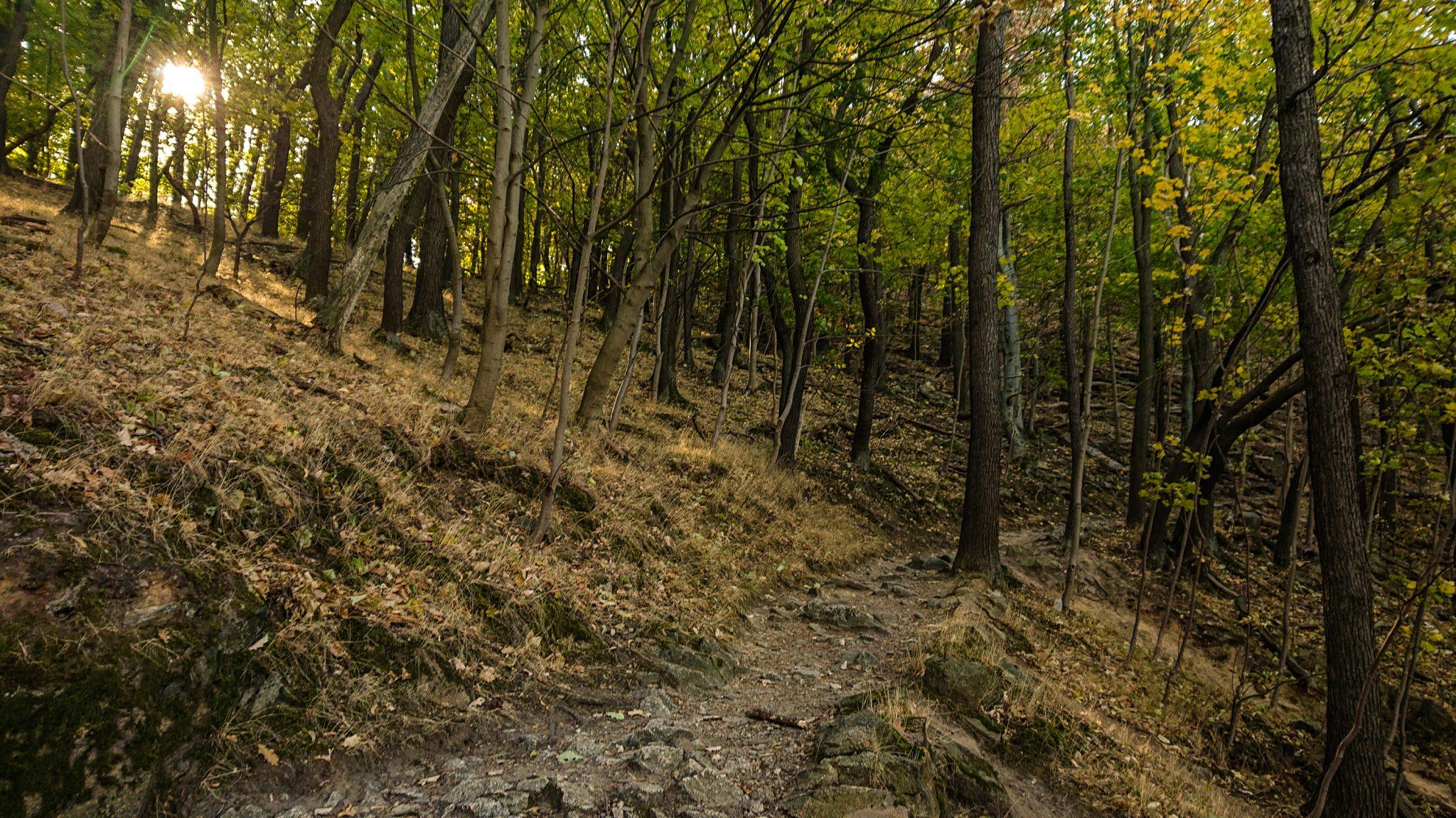 Rundwanderung Thale nach Treseburg - über Hexentanzplatz, Bodetal und Roßtrappe, schmaler Wanderweg hoch auf den Hexentanzplatz über Serpentinen, steiniger Weg durch Wald