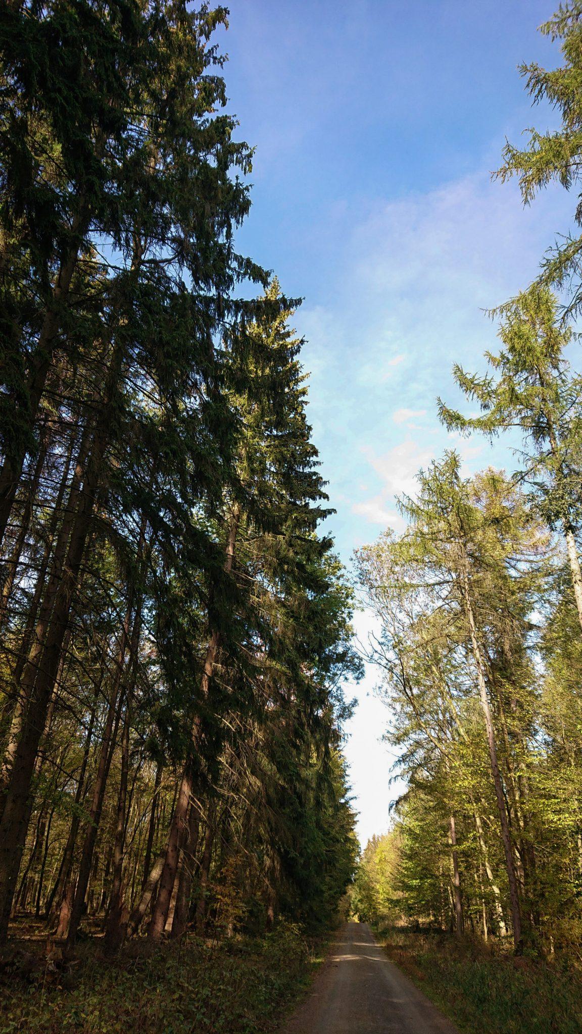 Rundwanderung Thale nach Treseburg - über Hexentanzplatz, Bodetal und Roßtrappe, Wanderweg ist breiter Forstweg zwischen Thale und Treseburg