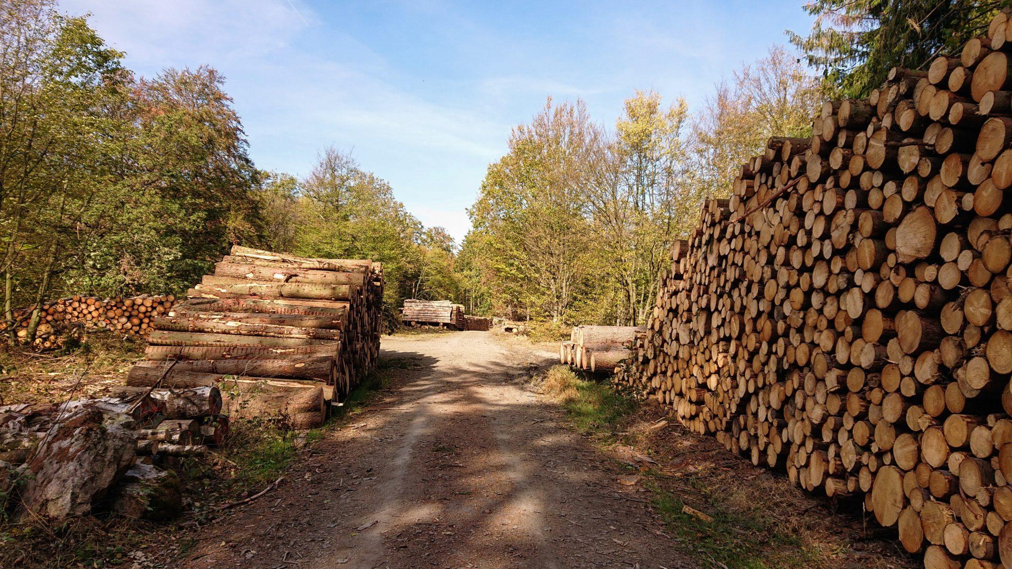 Rundwanderung Thale nach Treseburg - über Hexentanzplatz, Bodetal und Roßtrappe, Forstweg zwischen Thale und Treseburg, abgeholzte Bäume am Straßenrand