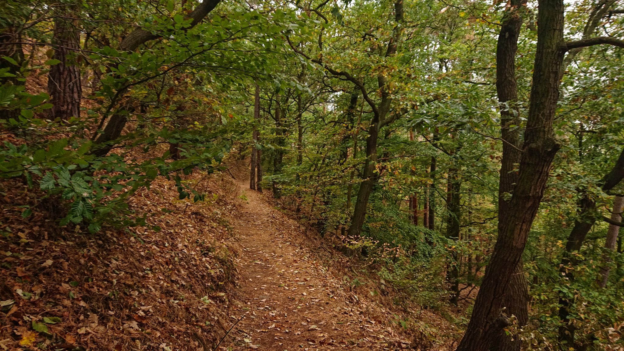 Rundwanderung auf der Blankenburger Teufelsmauer, Wanderweg über den Nordhang durch schönen, dichten Buchenwald, schmaler Wanderpfad