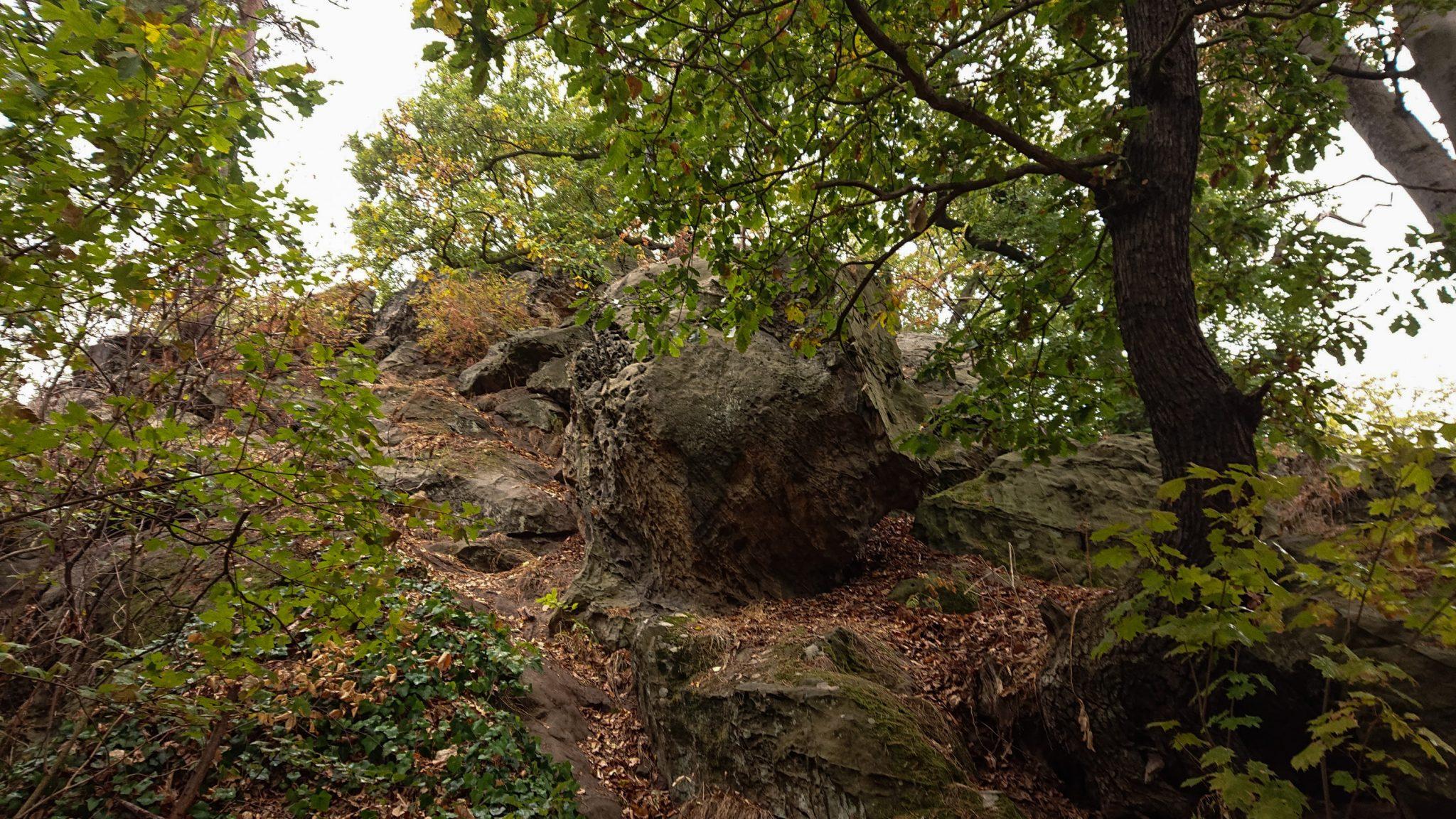 Rundwanderung auf der Blankenburger Teufelsmauer, Felsformationen, angrenzender Wald, Laub in Herbstfarben, große Steine, abwechslungsreicher schmaler Pfad über Stock und Stein