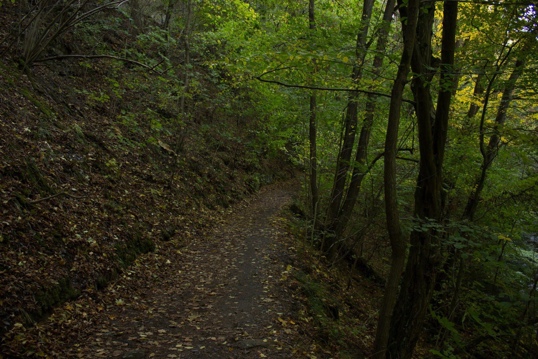 Rundwanderung Thale nach Treseburg - über Hexentanzplatz, Bodetal und Roßtrappe, naturbelassener Wanderweg im schönen Bodetal, umgeben von dichtem grünen Wald, Bode fließt durch idyllisches Tal