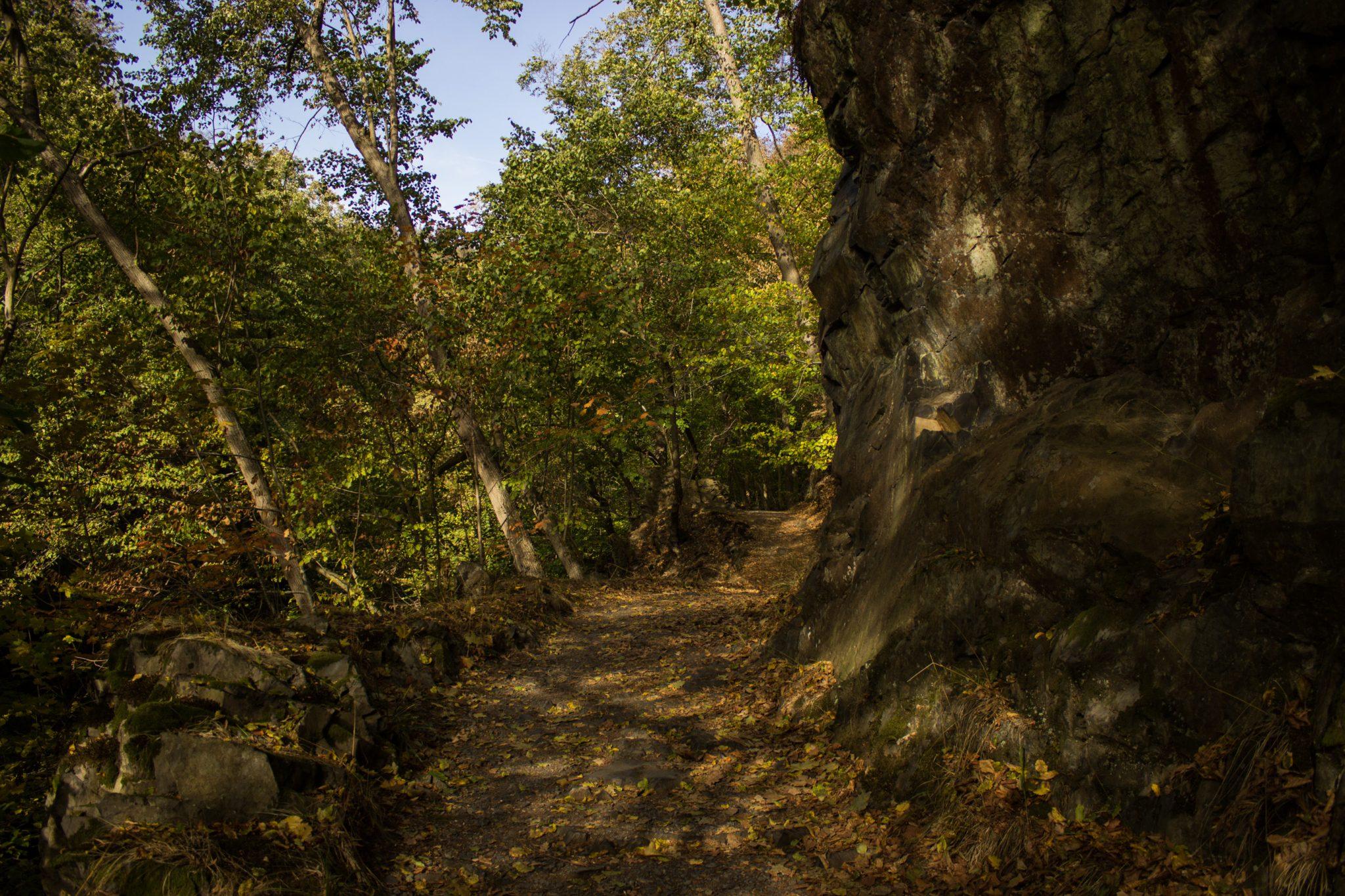 Rundwanderung Thale nach Treseburg - über Hexentanzplatz, Bodetal und Roßtrappe, Wanderweg im Bodetal, großer Felsen neben naturbelassenem Wanderpfad, überall schöner dichter Wald