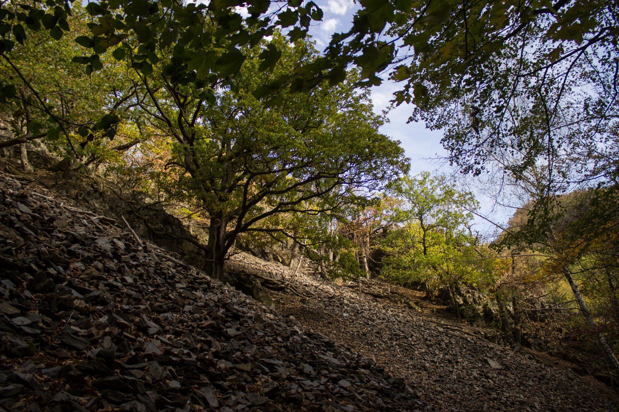 Rundwanderung Thale nach Treseburg - über Hexentanzplatz, Bodetal und Roßtrappe, Wanderweg im Bodetal, großer Erdrutsch hat Vegetation zerstört, schöner dichter Wald entsteht neu