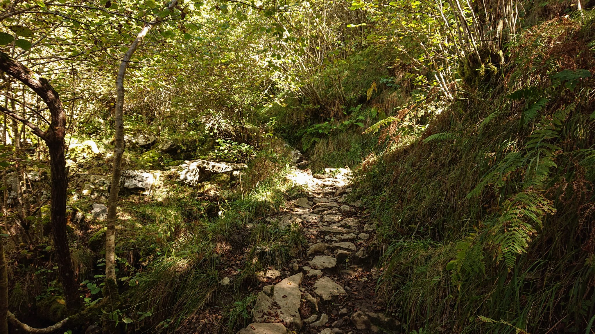 Wanderung Poncebos nach Bulnes in den Picos de Europa, Wanderpfad durch lichten Wald, tolles Wanderwetter, Steine, grüne Farne