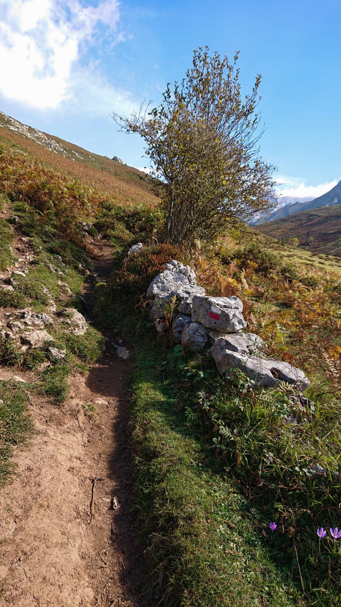 Wanderung Poncebos nach Bulnes in den Picos de Europa, schmaler Wanderpfad, saftig grüne Wiese, Steine und Geröll, tolles Wanderwetter, Wegmarkierung rot weiß Streifen, Weg zur Ebene Collado de Pandebano