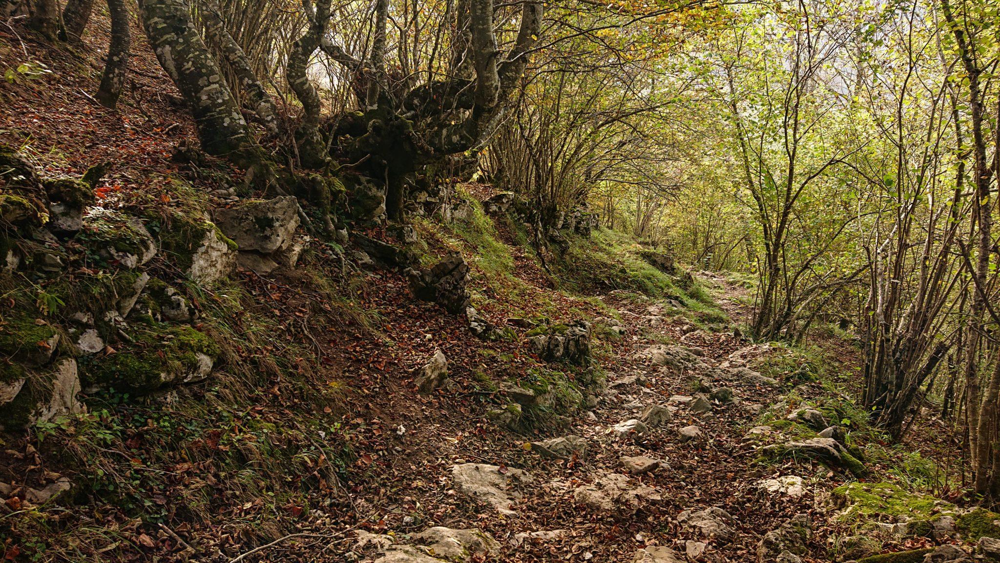 Wanderung Poncebos nach Bulnes in den Picos de Europa, Wanderpfad durch lichten Wald, tolles Wanderwetter, Steine