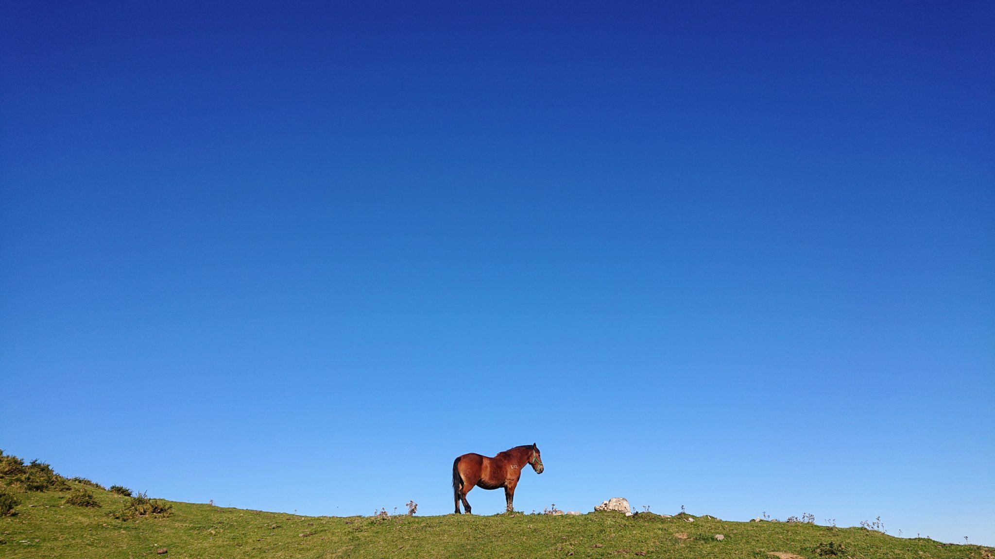 Wanderung Mirador de Ordiales Picos de Europa Spanien, Pferd, blauer wolkenloser Himmel,