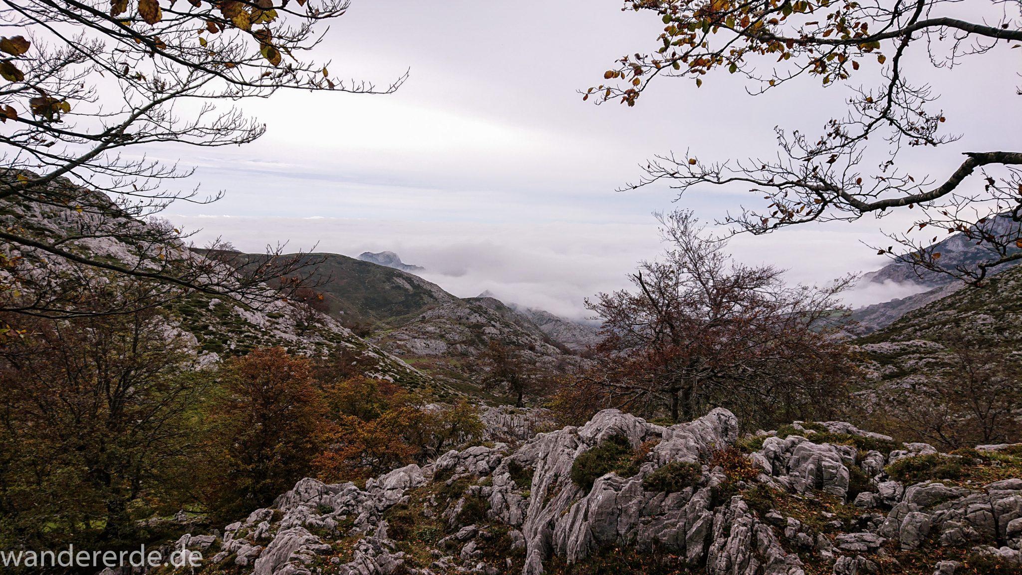 Wanderung Vega de Ario Picos de Europa Spanien, Bäume in Bergregion, Steine und Felsen, dichte Wolkenfelder