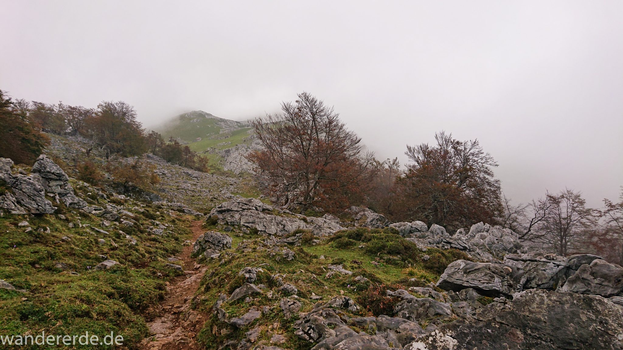 Wanderung Vega de Ario Picos de Europa Spanien, Bäume in Bergregion, Steine, dichte Wolkenfelder, zerklüftete Felsen, schmaler Wanderpfad, keine weite Aussicht
