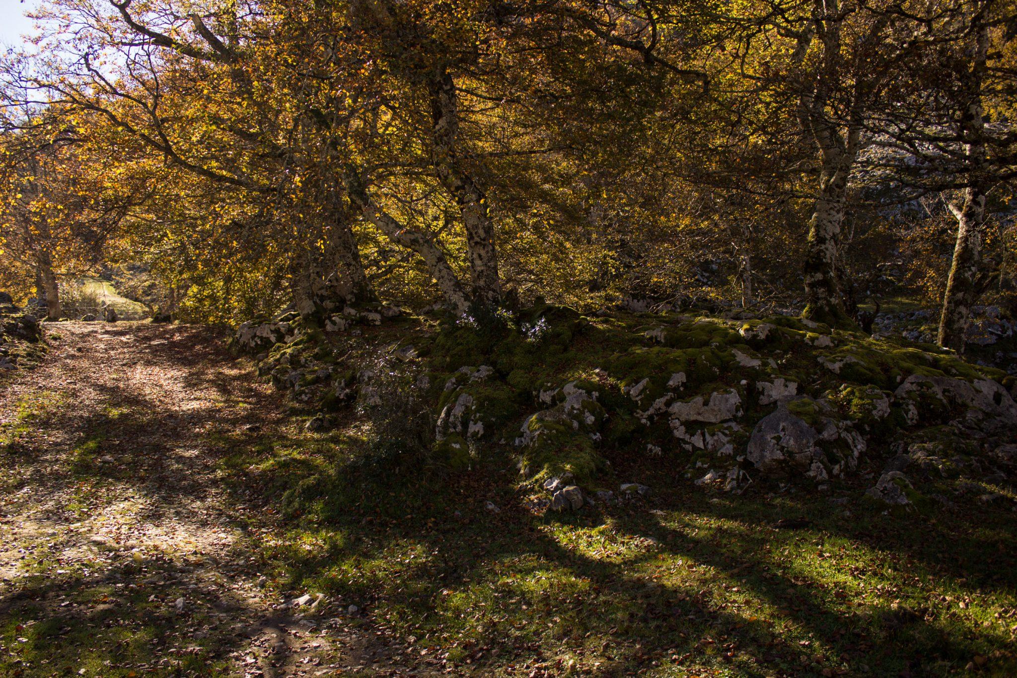 Wanderung Mirador de Ordiales Picos de Europa Spanien,  Herbst, Herbststimmung, Wanderweg, Bäume, Wald