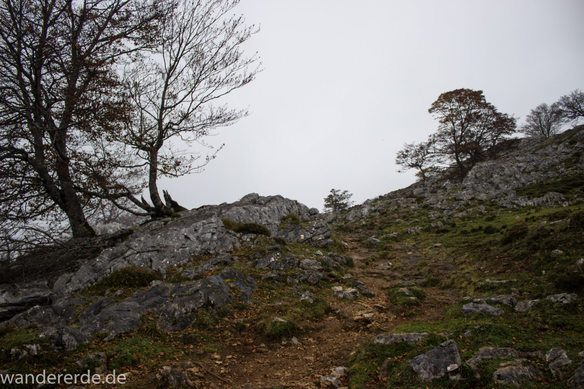 Wanderung Vega de Ario Picos de Europa Spanien, Bäume in Bergregion, Steine, dichte Wolkenfelder, zerklüftete Felsen, keine weite Aussicht, grüne Wiese, schmaler Wanderpfad