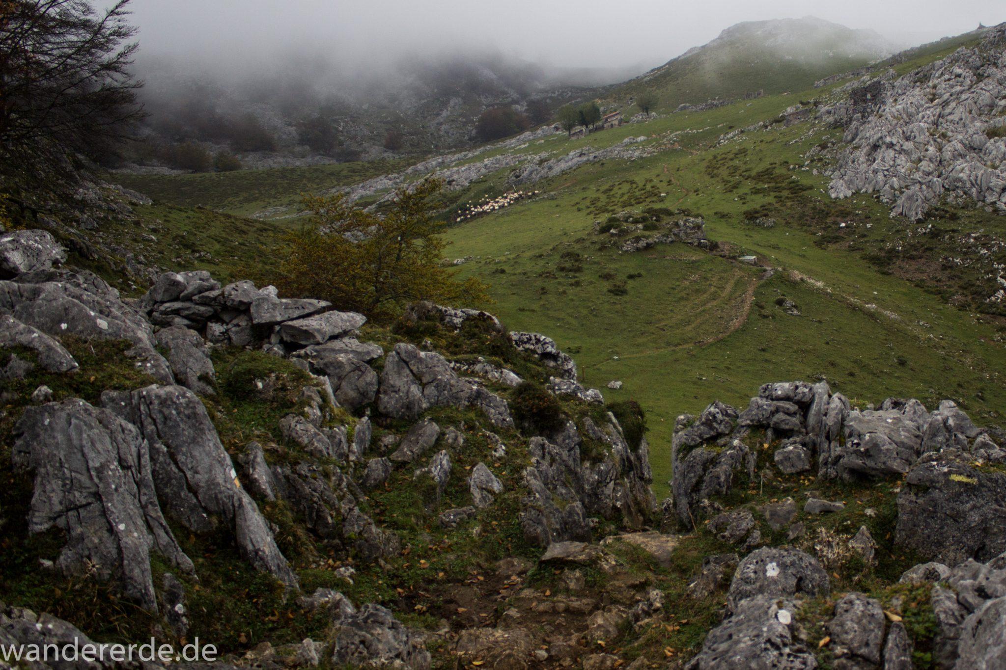 Wanderung Vega de Ario Picos de Europa Spanien, Bäume in Bergregion, Steine, dichte Wolkenfelder, zerklüftete Felsen, schöne Aussicht auf grüne Wiese, schmaler Wanderpfad, wandern