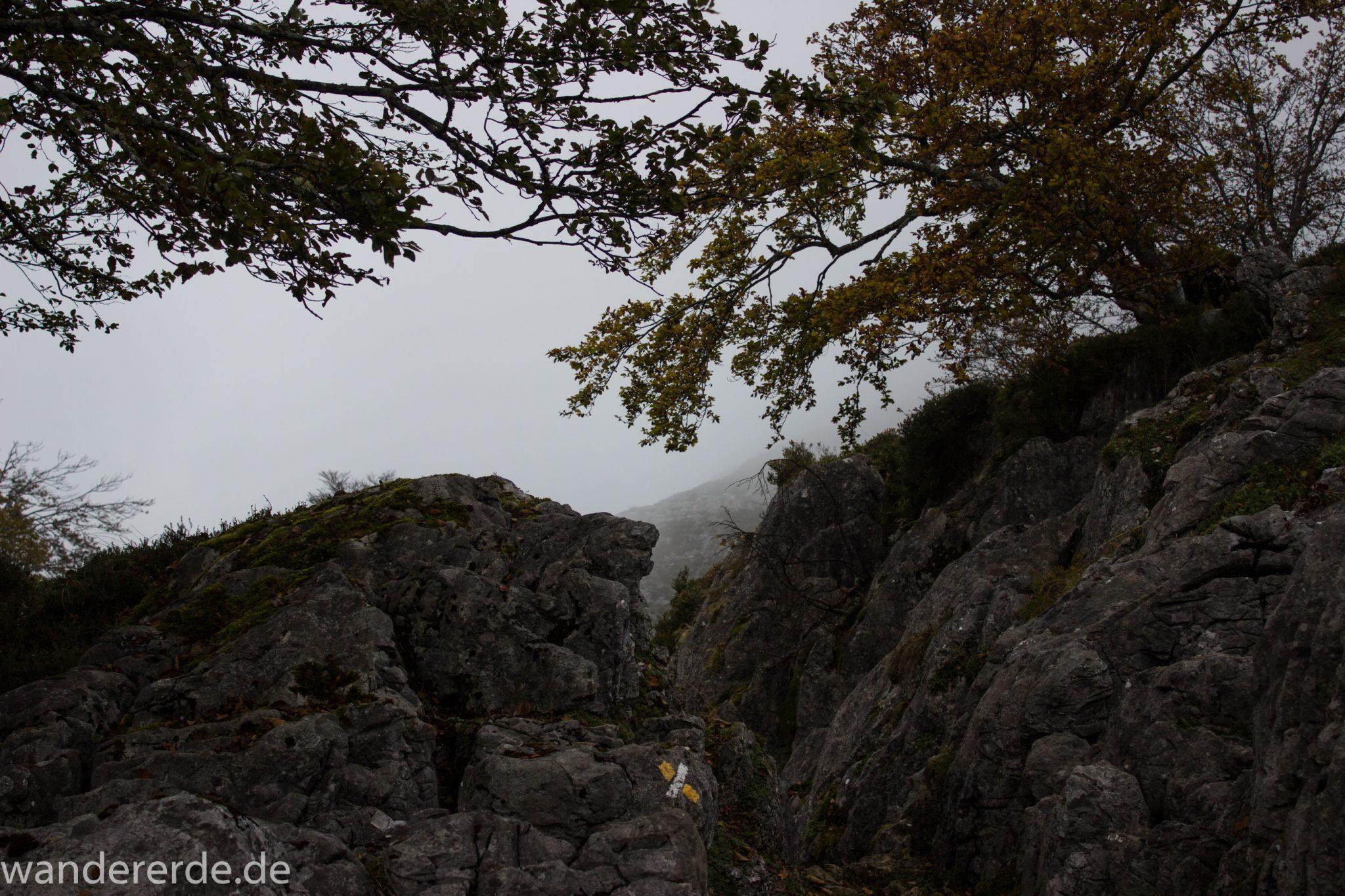Wanderung Vega de Ario Picos de Europa Spanien, Bäume in Bergregion, Steine, dichte Wolkenfelder, zerklüftete Felsen, keine weite Aussicht, grüne Wiese, schmaler Wanderpfad, Wegmarkierung für falsche Richtung