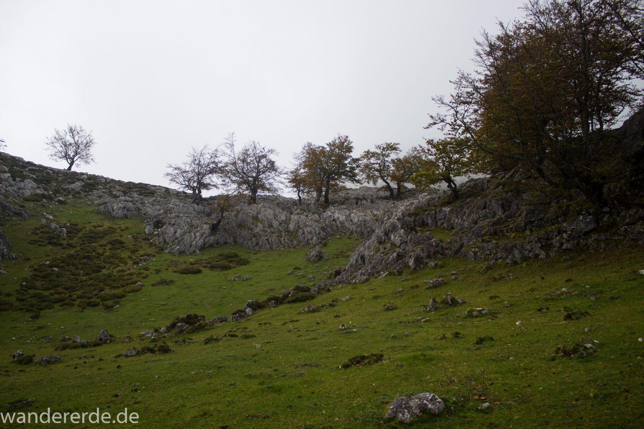 Wanderung Vega de Ario Picos de Europa Spanien, dichte Wolken, Bergregion in Nordspanien, Wandern, zerklüftete Felsen, Steine, atmosphärisch, grüne Wiese und Bäume