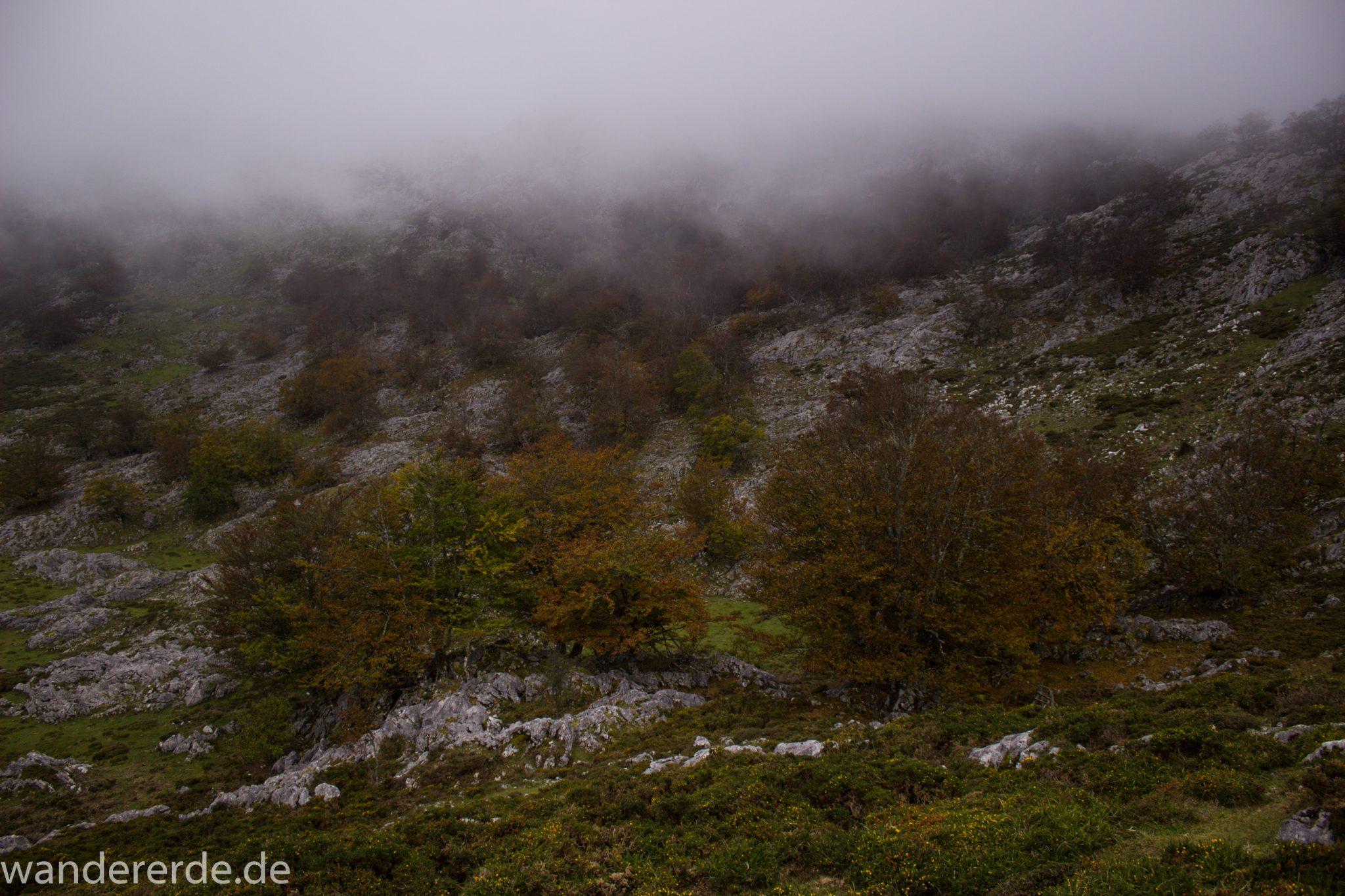 Wanderung Vega de Ario Picos de Europa Spanien, Bäume in Bergregion, Steine, dichte Wolkenfelder, zerklüftete Felsen, keine weite Aussicht, grüne Wiese, tolle Atmosphäre