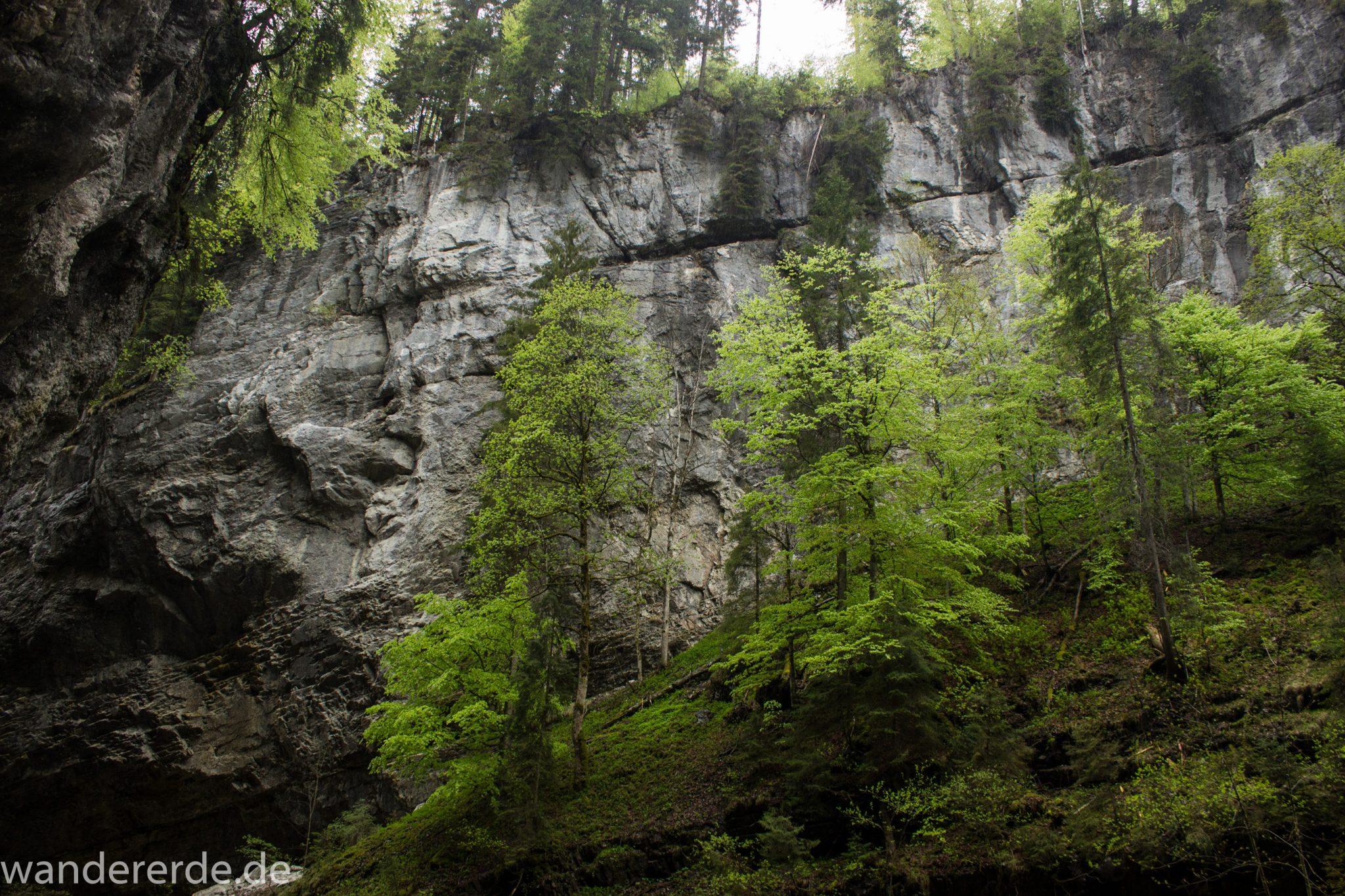 Wanderung durch die Breitachklamm im Allgäu, sehr hohe Felswände, Klamm umgeben von schönem Wald, Felsen im Fluss, Schneeschmelze im Allgäu, Wanderweg durch die Klamm