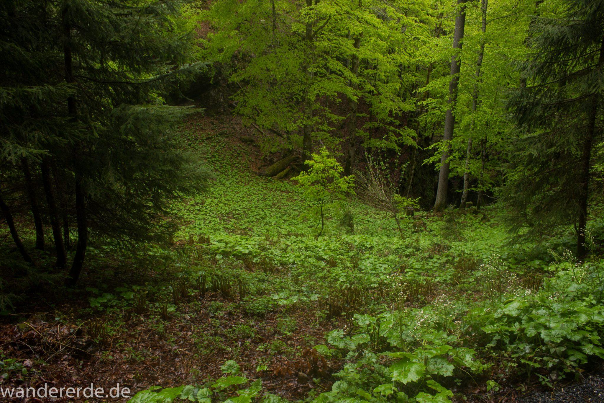 Wanderung bei der Breitachklamm im Allgäu, Wanderweg zum Waldhaus umgeben von schönem Wald