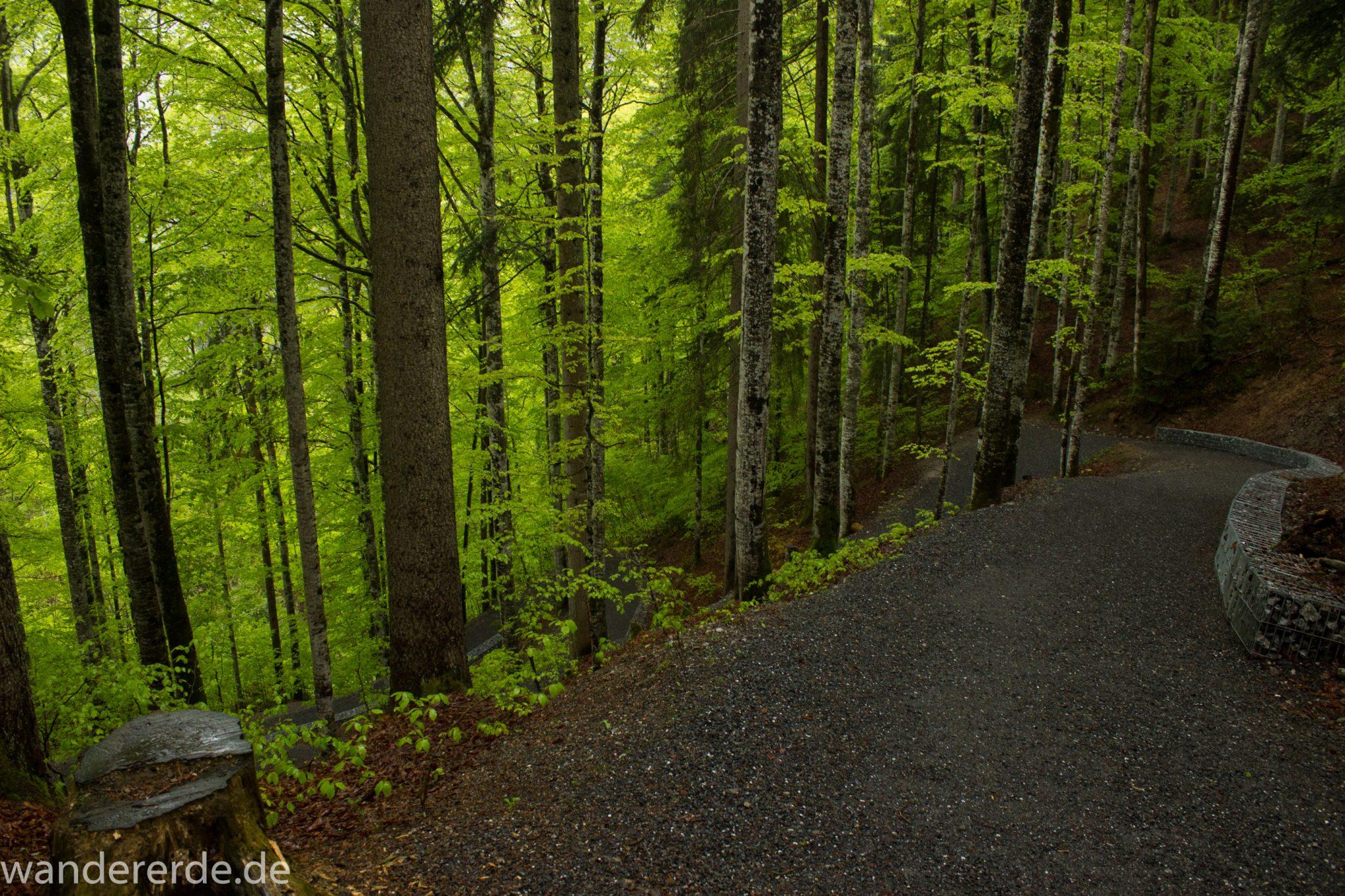 Wanderung bei der Breitachklamm im Allgäu, toller Wanderweg umgeben von schönem und dichtem Wald