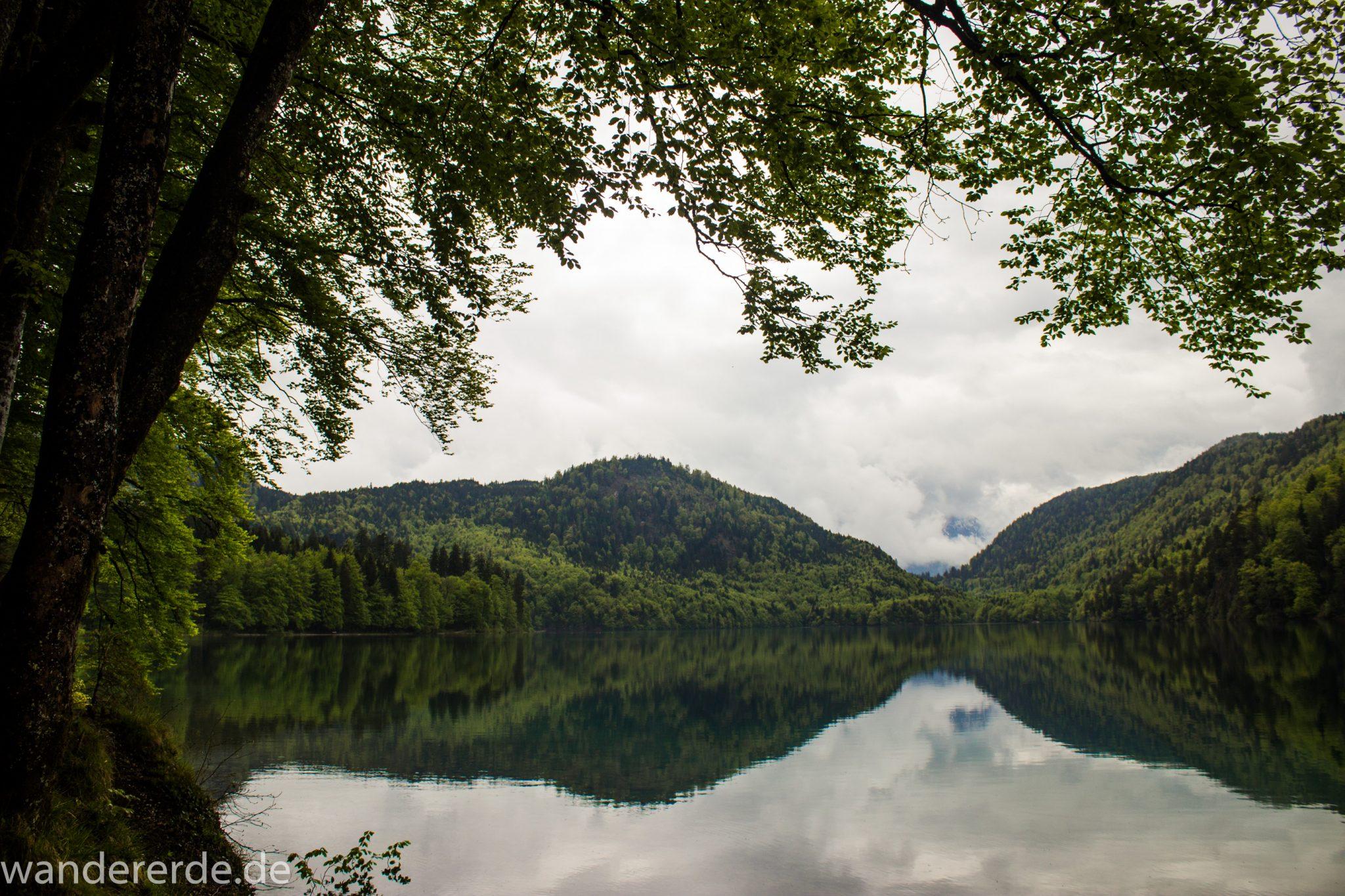 Alpsee bei Hohenschwangau, in der Nähe von Schloss Neuschwanstein, Aussicht auf Alpsee mit grünem Wald ringsrum, Laubbaum, Nadelbaum, dichte Bewölkung, Umgebung spiegelt sich im See