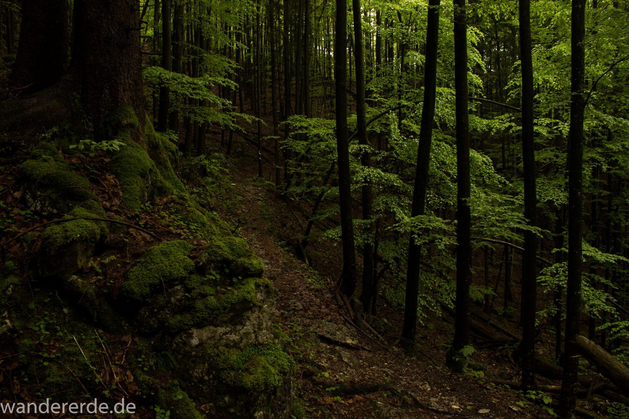 Wanderung beim Alpsee bei Hohenschwangau, schöner schmaler Wanderweg durch Laubwald und Nadelwald, Frühling in Bayern, alte Bäume werden liegen gelassen, Moos am Baum