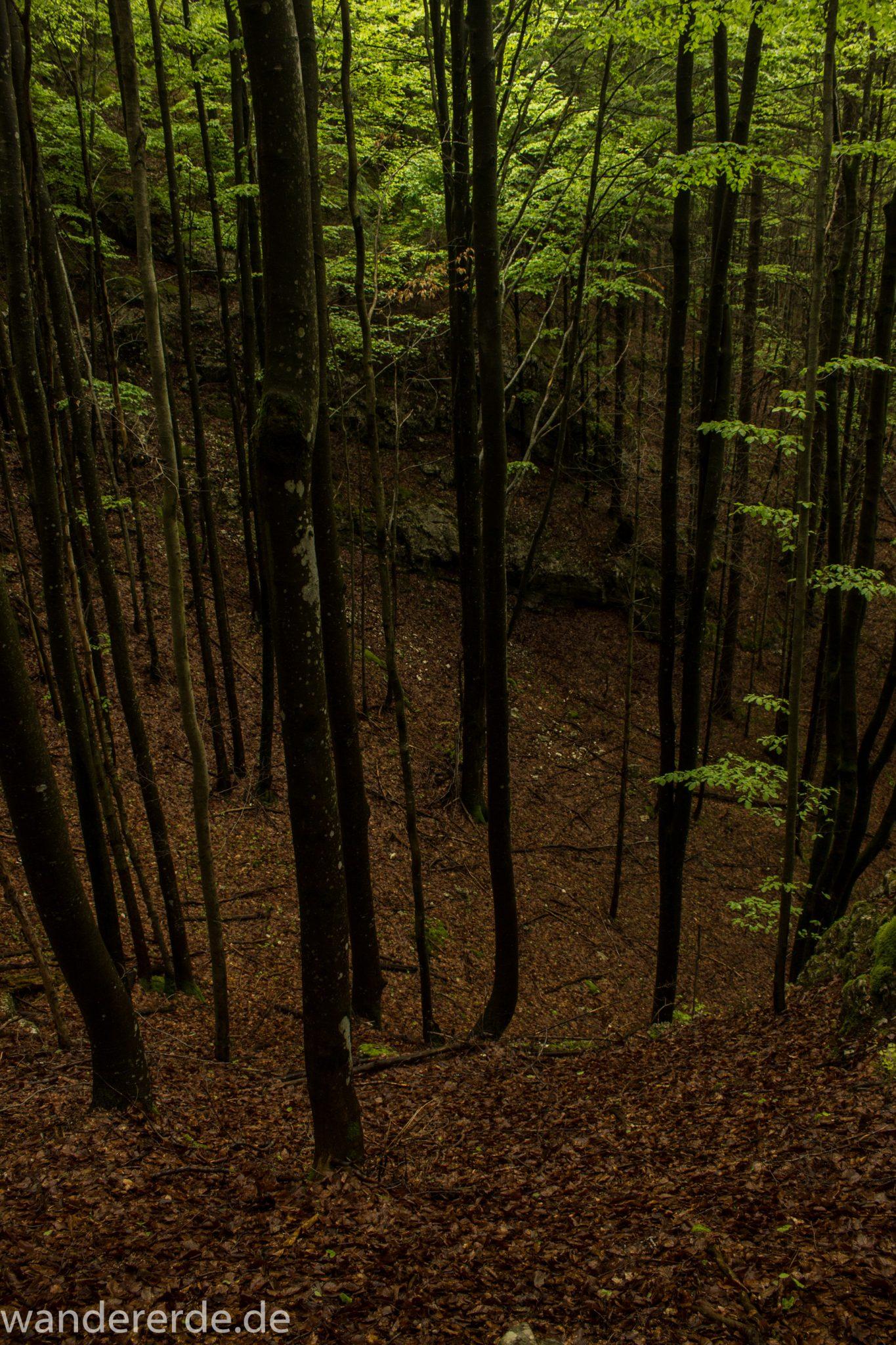 Wanderung beim Alpsee bei Hohenschwangau, schöner Wanderweg durch Laubwald und Nadelwald, Frühling in Bayern, alte Bäume werden liegen gelassen