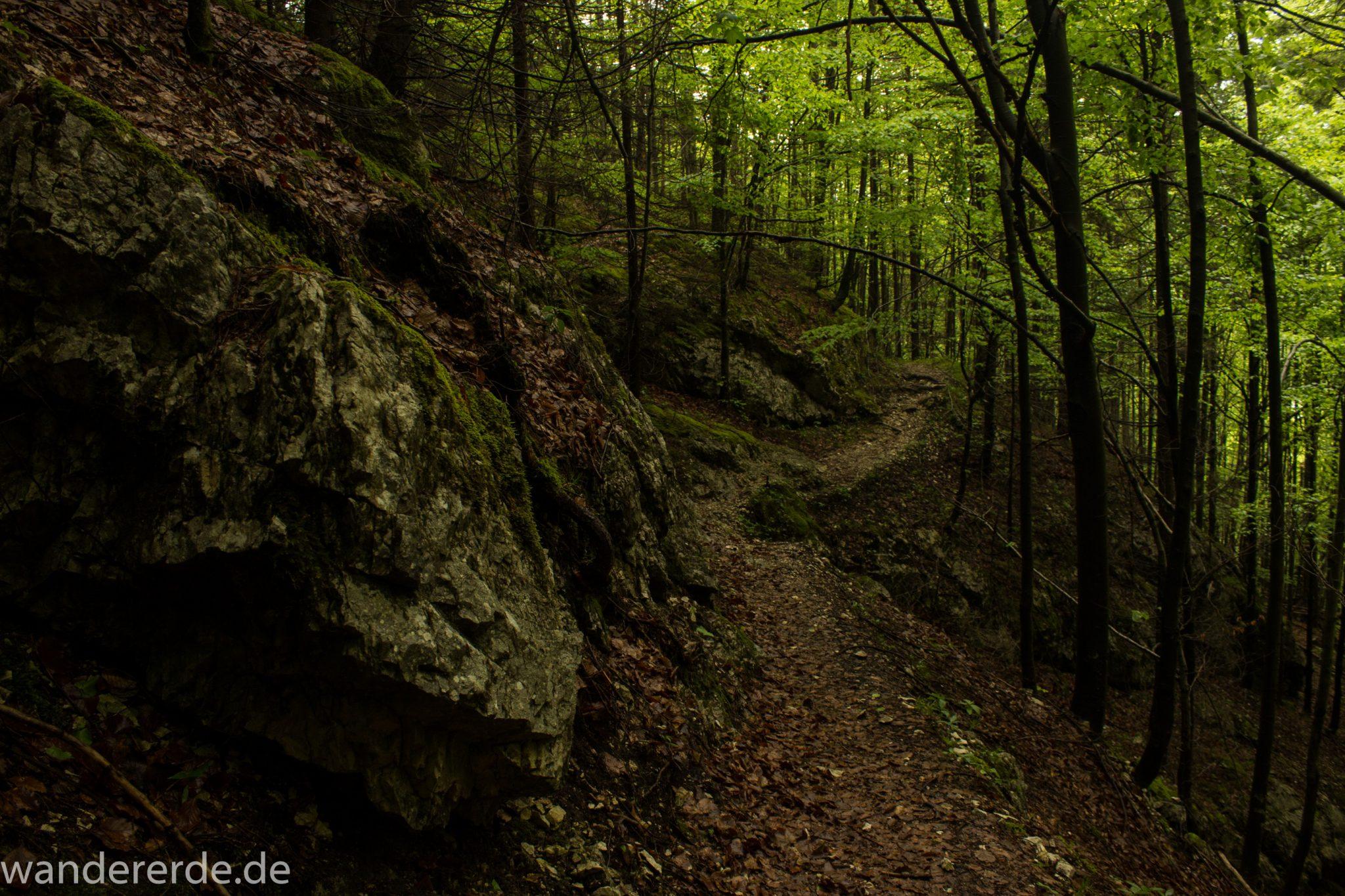 Wanderung beim Alpsee bei Hohenschwangau, schöner schmaler Wanderweg durch Laubwald und Nadelwald, Frühling in Bayern, große Felsen am Wegrand